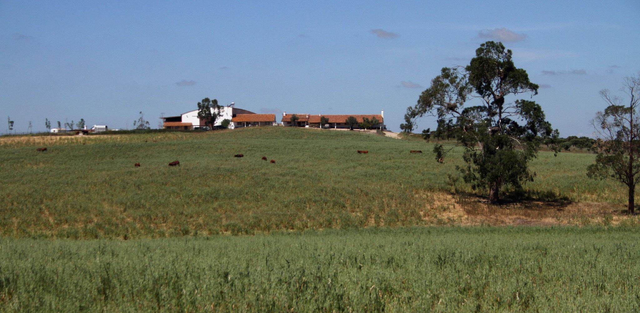 Das Landgut Monte da Aparica mit den Ökonomiegebäuden in der Mitte, dem Wohnhaus der Besitzer rechts und dem (etwas kleineren) Ferienbungalow links davon