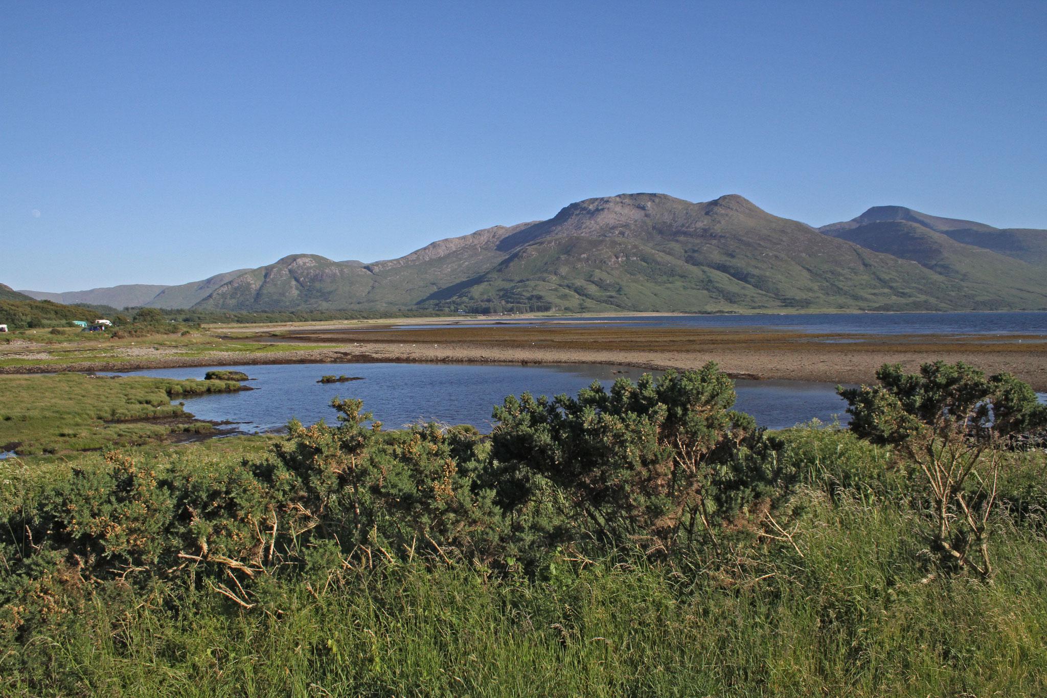 Seeadler können wir an verschiedenen Orten beobachten, auch Brutplätze, u.a. am Loch Scridain ...