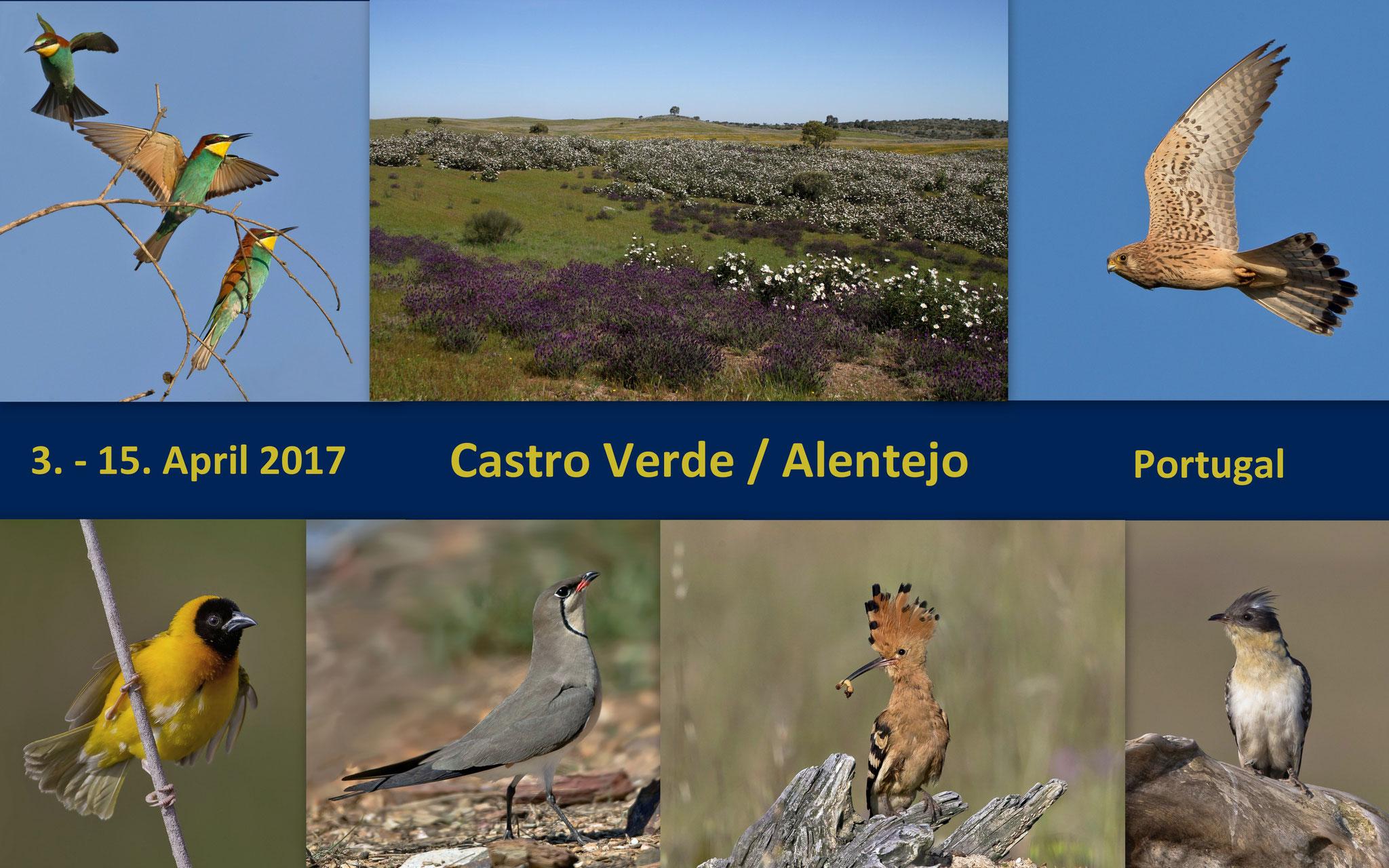 Wie bereits im Vorjahr verbrachten wir im April 2017 wieder zwei Wochen bei unseren portugiesischen Gastgebern (Bilder manuell weiterbewegen)