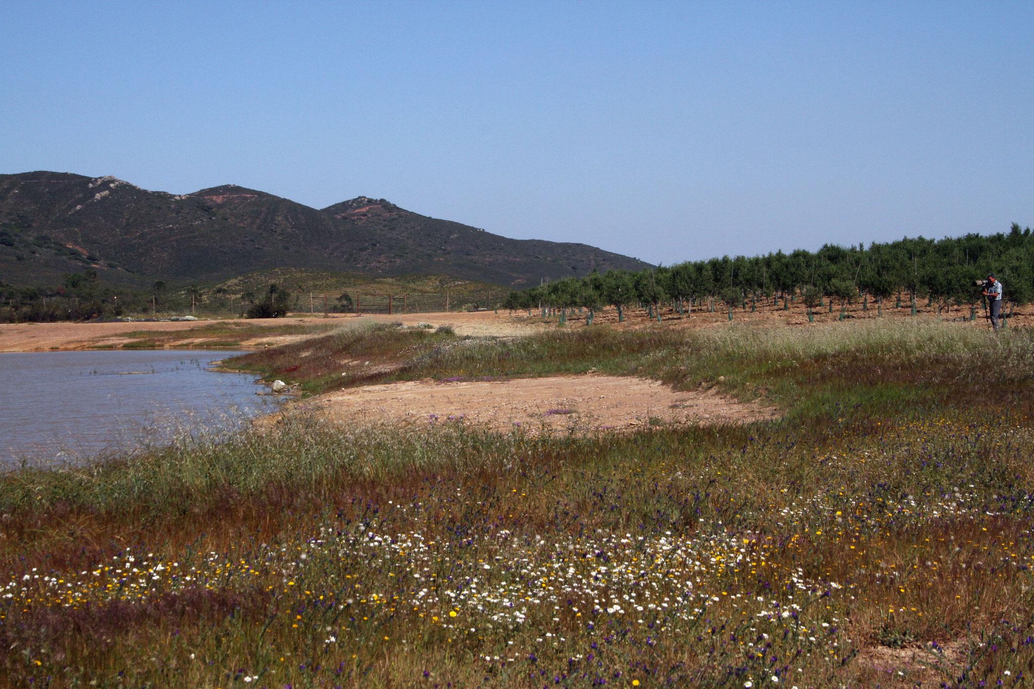 An einem See zwischen Castro Verde und Mertola, der hauptsächlich der Bewässerung der umliegenden Olivenplantagen dient, ...