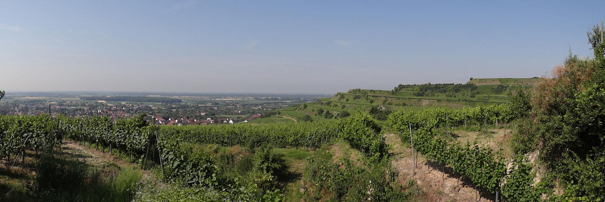 Kaiserstuhl-Landschaft mit den typischen Weinbauterrassen (bei Ihringen)