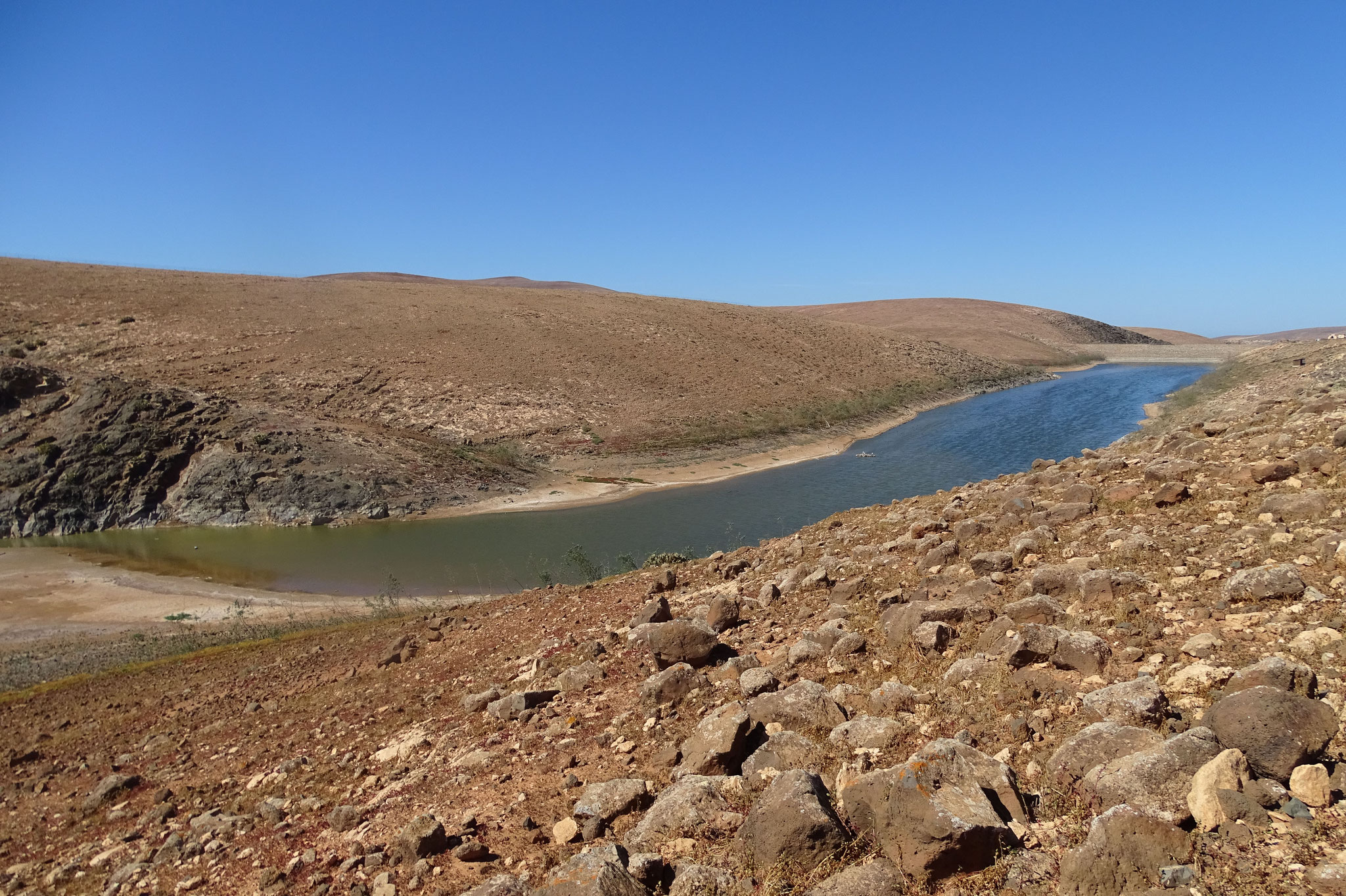 ... zum Los Molinos-Stausee (endlich mal Süsswasser!) wo wir einige Limikolen sowie 3 Löffler beobachten (aber in weiter Distanz)