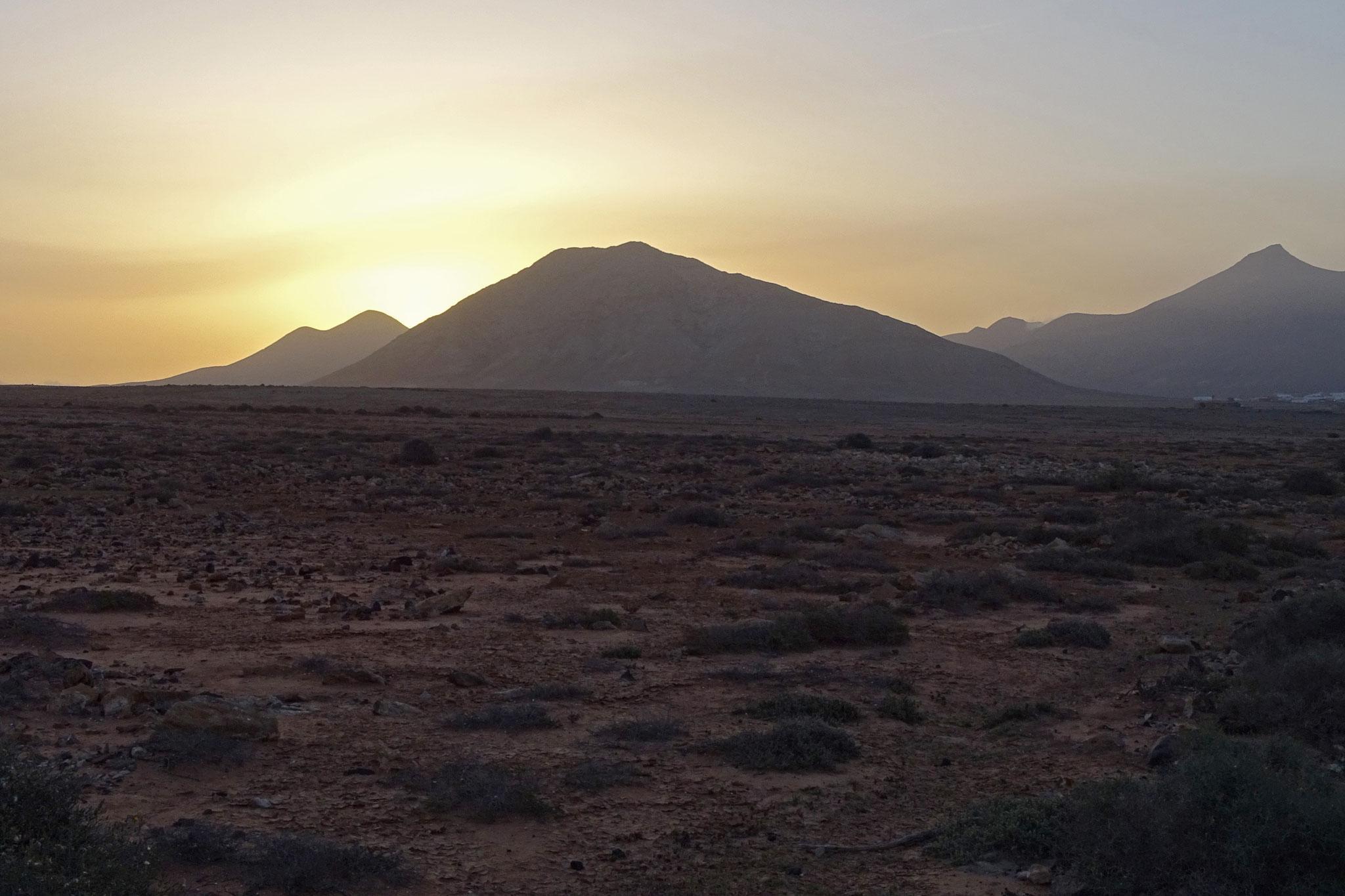 Zurück in Fuerteventura noch einige Beobachtungen bei morgendlichen Touren durch die Tindaya-Halbwüste: