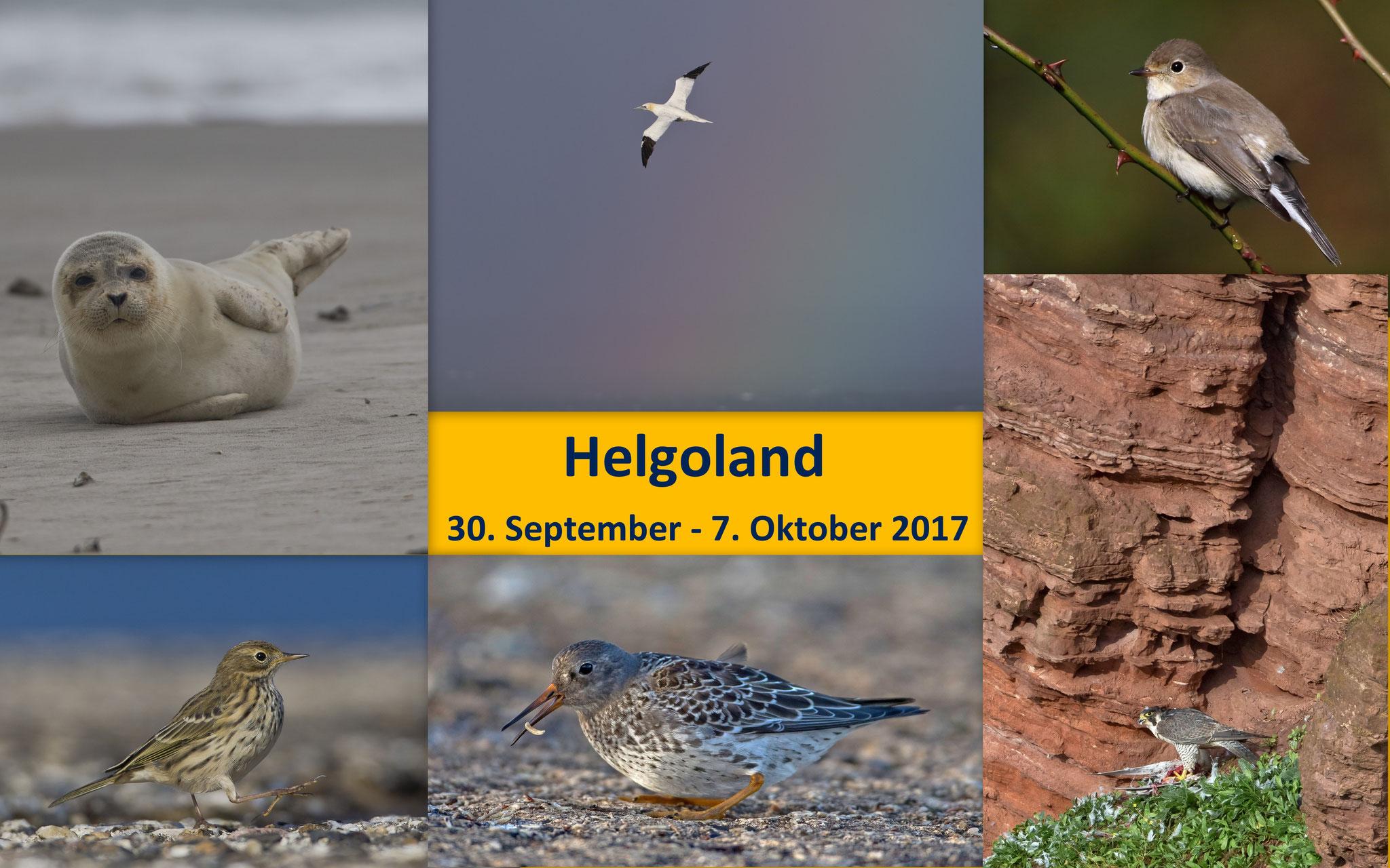 Nach 2012 und 2013 besuchten wir die Insel Helgoland zum dritten Mal (Bilder manuell weiterbewegen)
