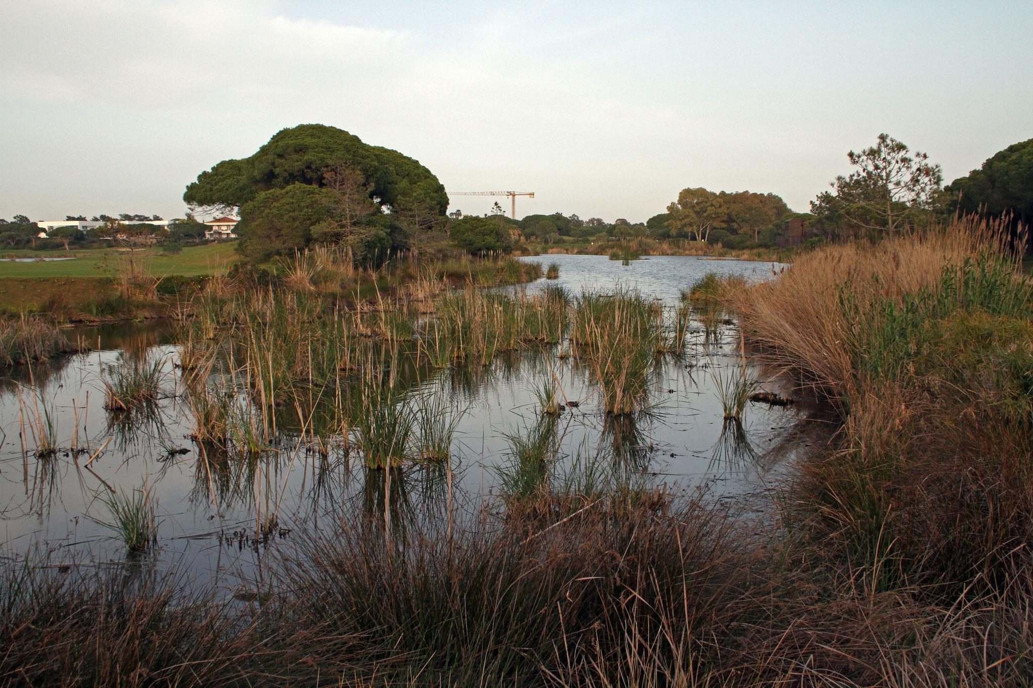 """Bei einem Tagesausflug an die Algarve-Küste besuchen wir das Gebiet """"Quinta do Lago"""". Typisch: Luxus-Ferienhäuser, Golfplatz und mittendrin Natur pur"""