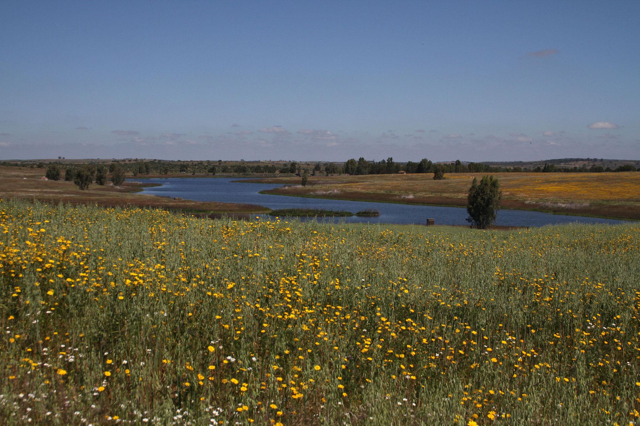Ein kleiner See mit einer stattlichen Artenvielt an Wasservögeln gehört auch dazu, darunter Löffler, Rosaflamingos und viele Enten- und Limikolenarten