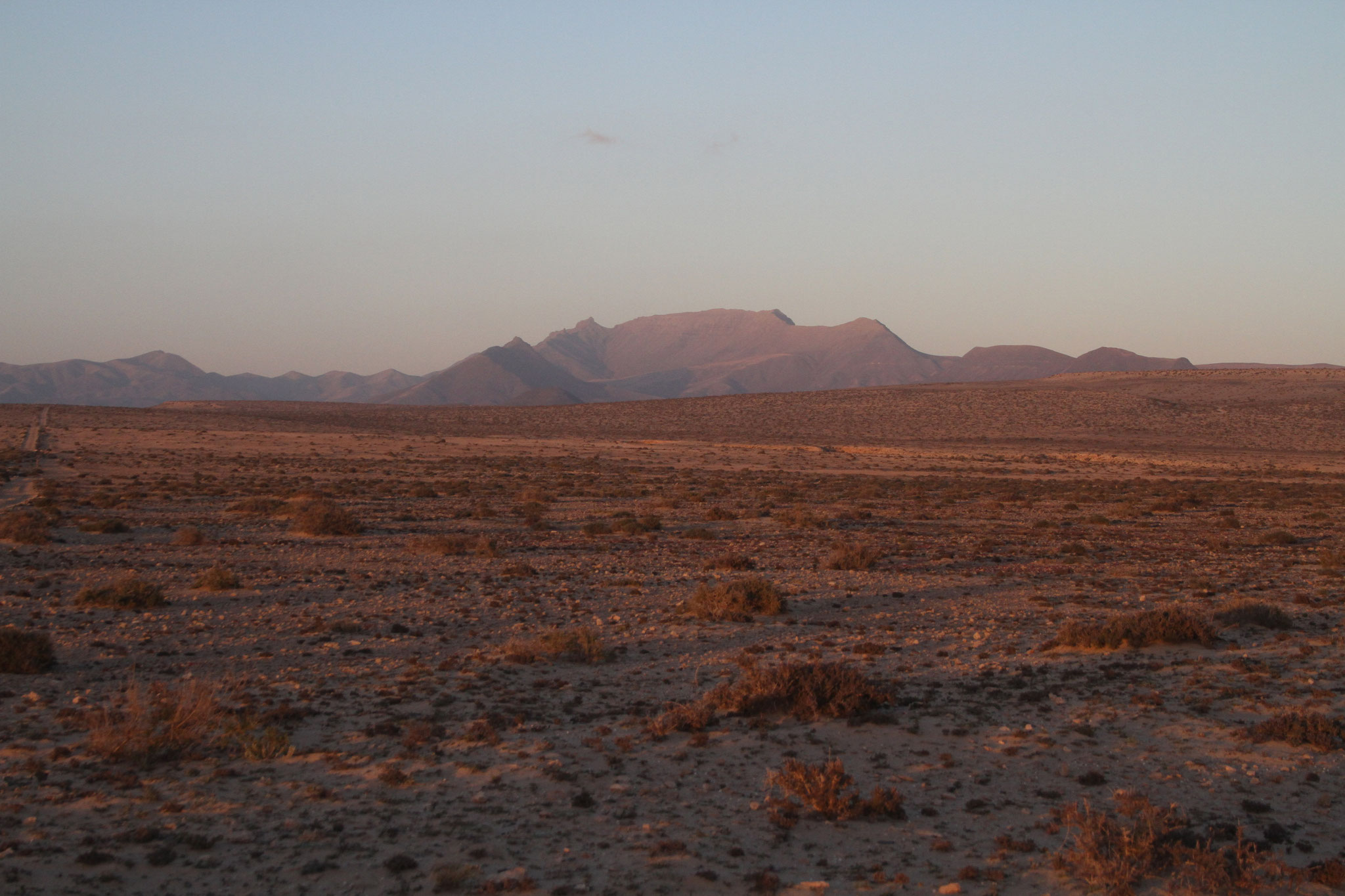 Am Abend wird es wieder ruhiger in der Wüste, die Chancen steigen ...