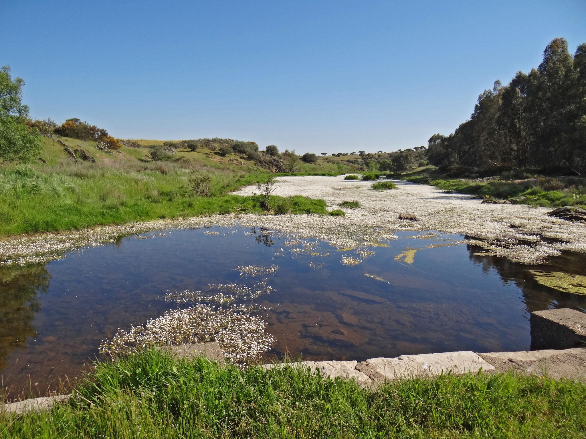 Einer unserer Lieblingsplätze ist die Flussaue auf dem 700-Hektar-Grundstück des Gastgebers ...