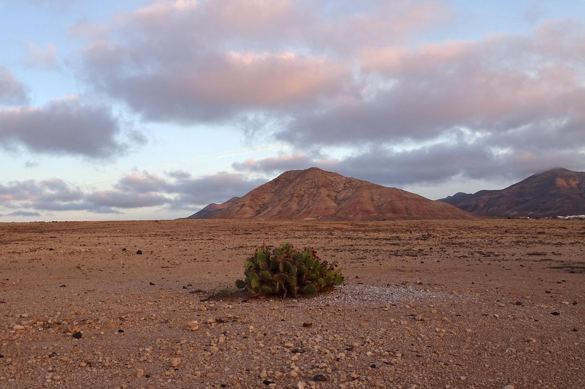... und besuchen öfters frühmorgens und gegen Abend die interessante Tindaya-Halbwüste