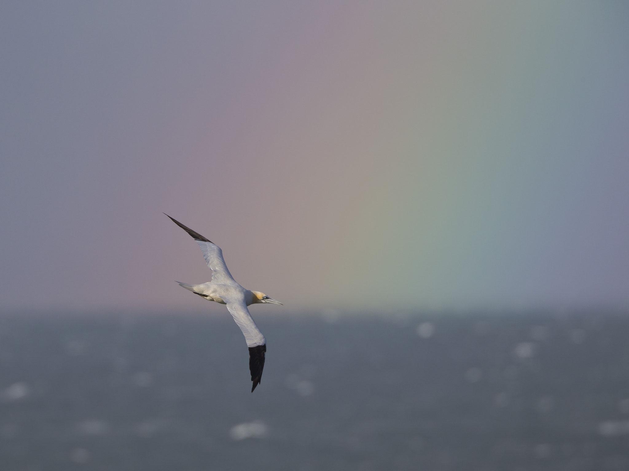 Flug in den Regenbogen