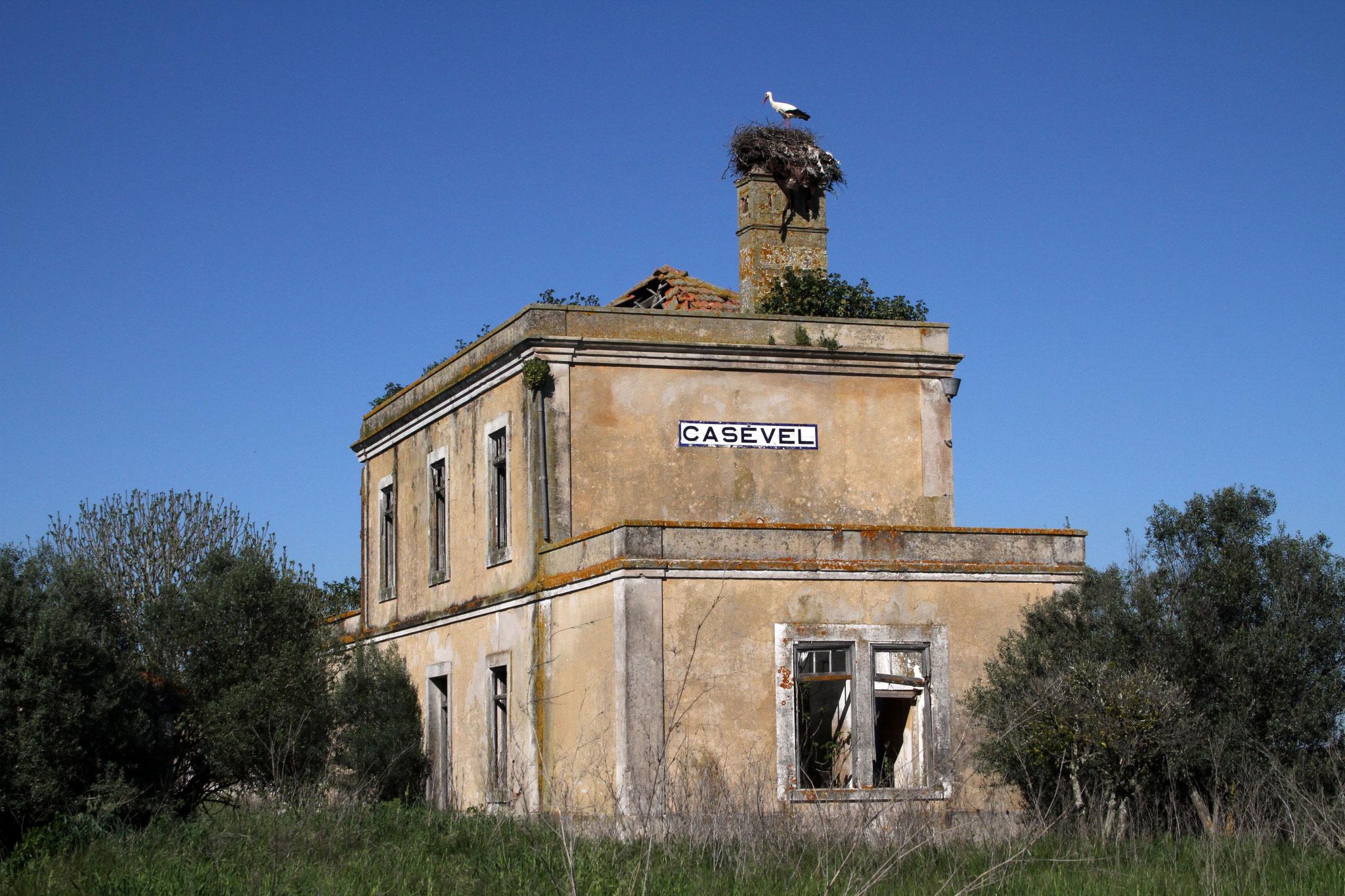 Typisch Portugal: der alte Bahnhof von Casevel wurde einfach stehengelassen und zerfällt langsam - für Vögel ein Paradies!