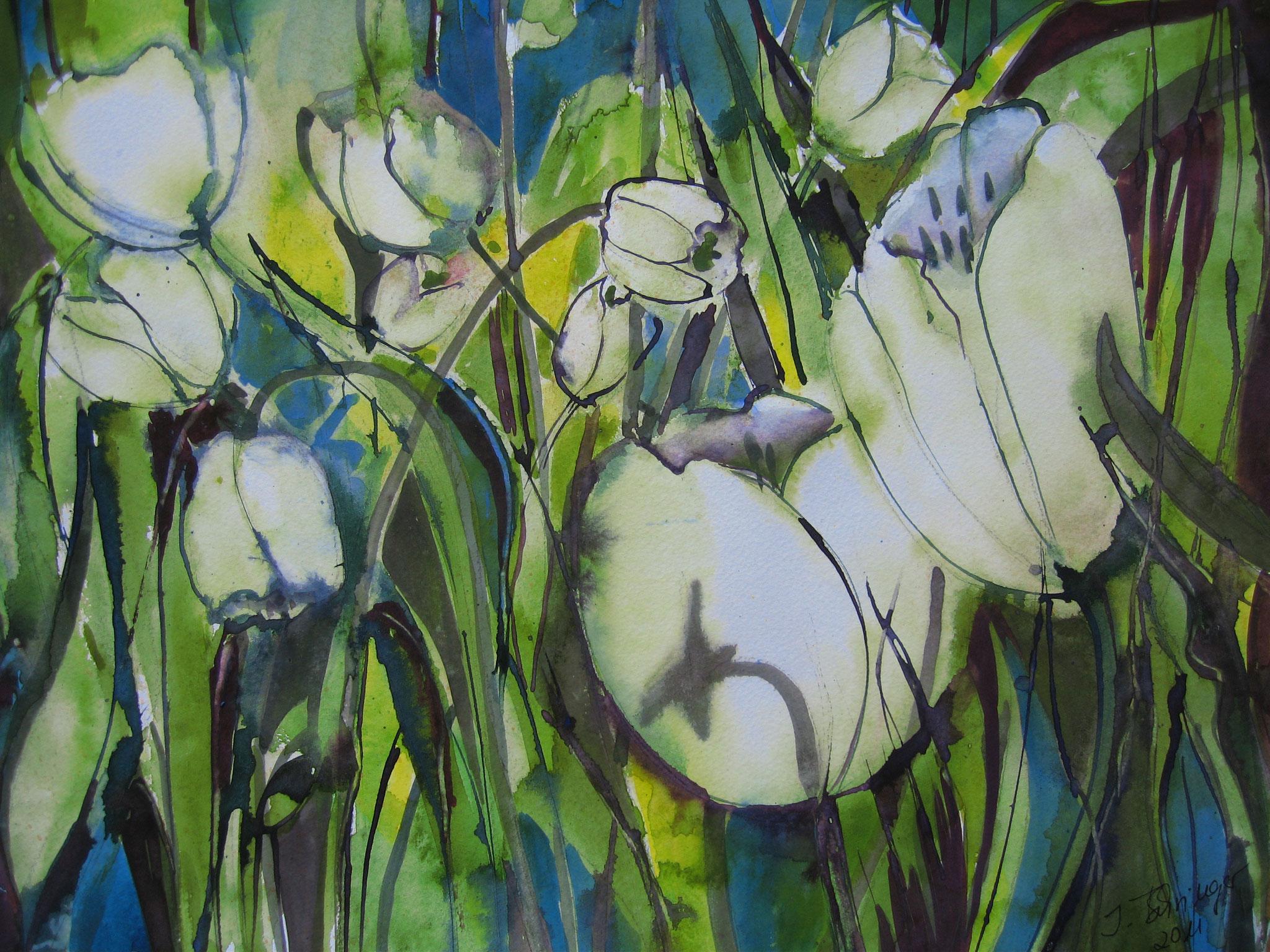 Tulpenmeer, Aquarell, 31 x 43 cm