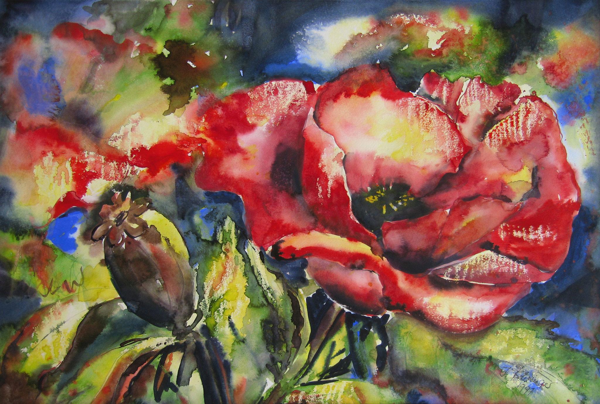 Roter Mohn, Aquarell, 42 x 62 cm