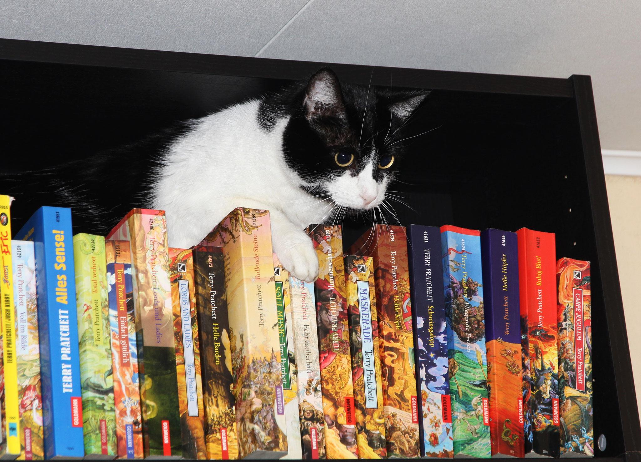 Eure piepsige Hoheit hält im Bücherregal Hof.