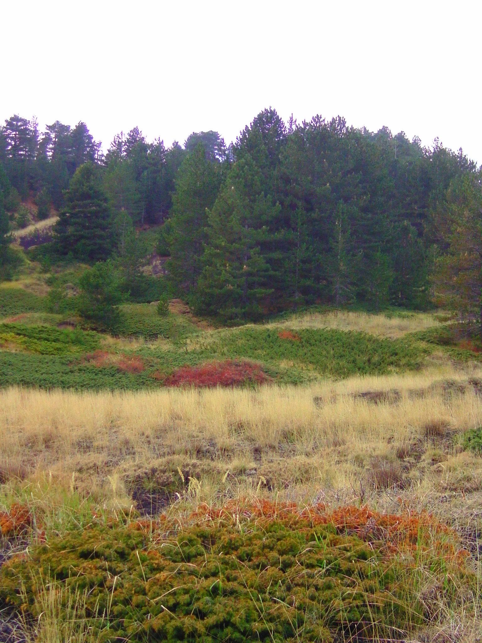 Die Nordseite des Etnas - zahlreiche Wanderwege führen den Berg hinauf.