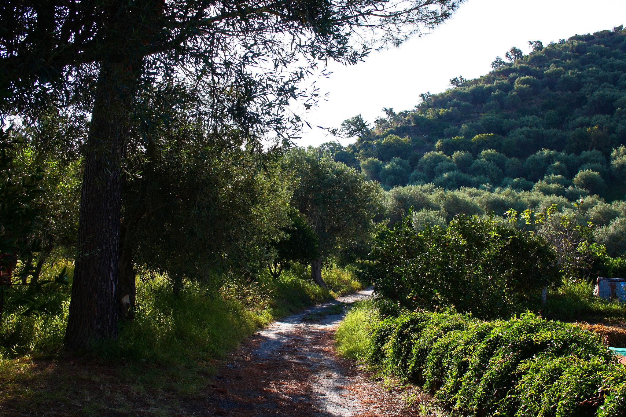 ... wunderbar gelegen im Olivenhain.