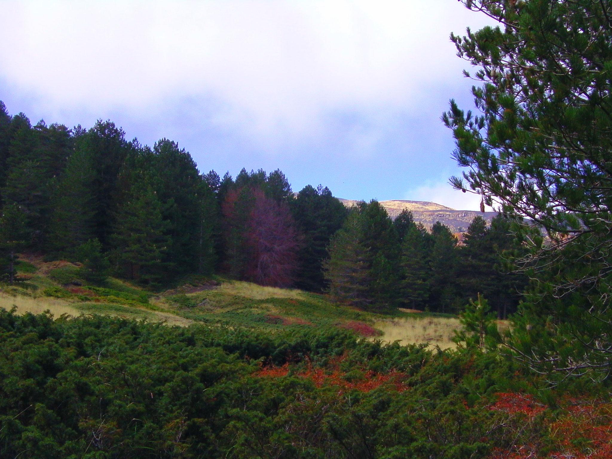Ein herrliches Farbenspiel zeigt sich besonders im Herbst.