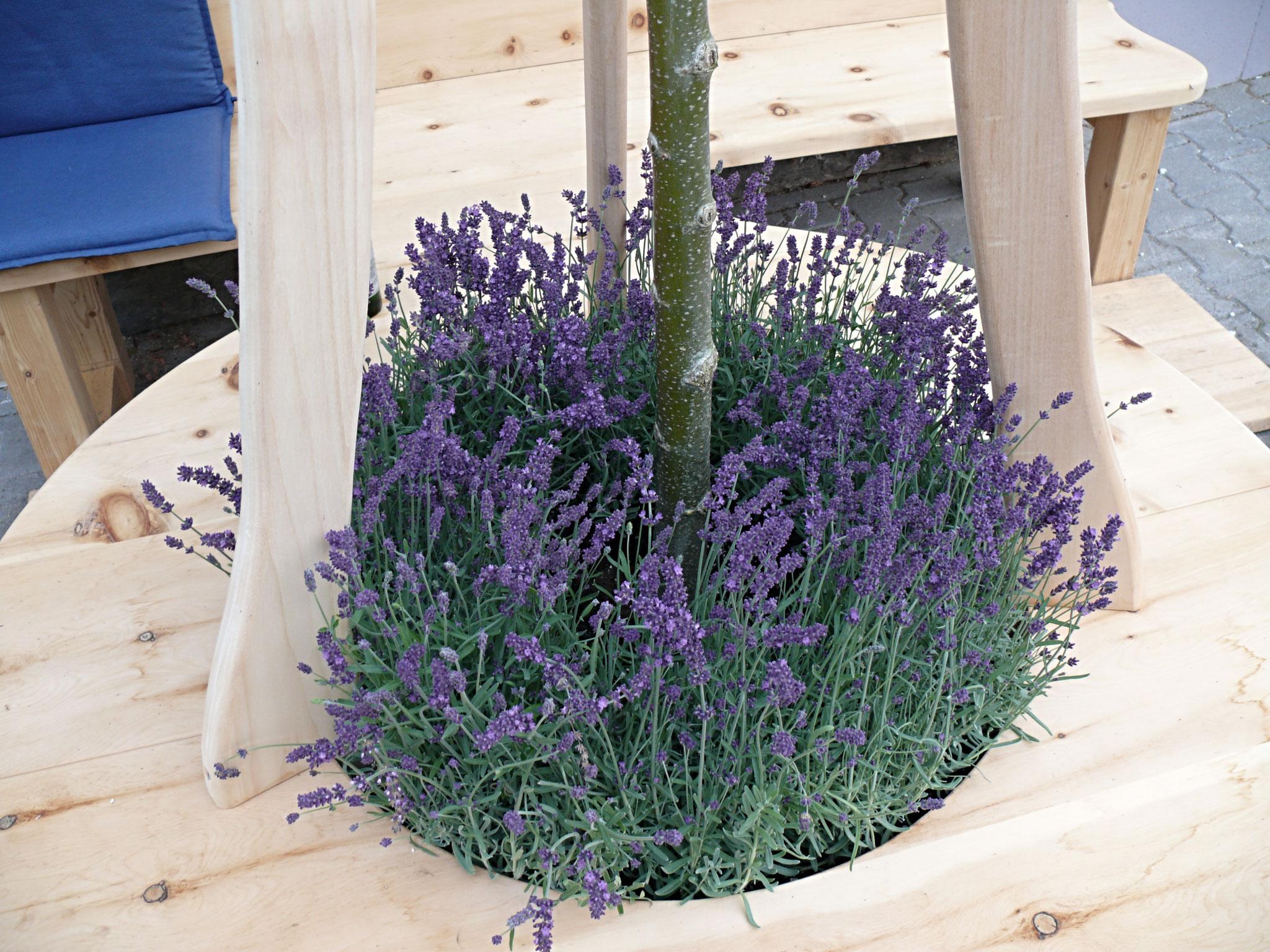 Lavendel für den mediterranen Hauch