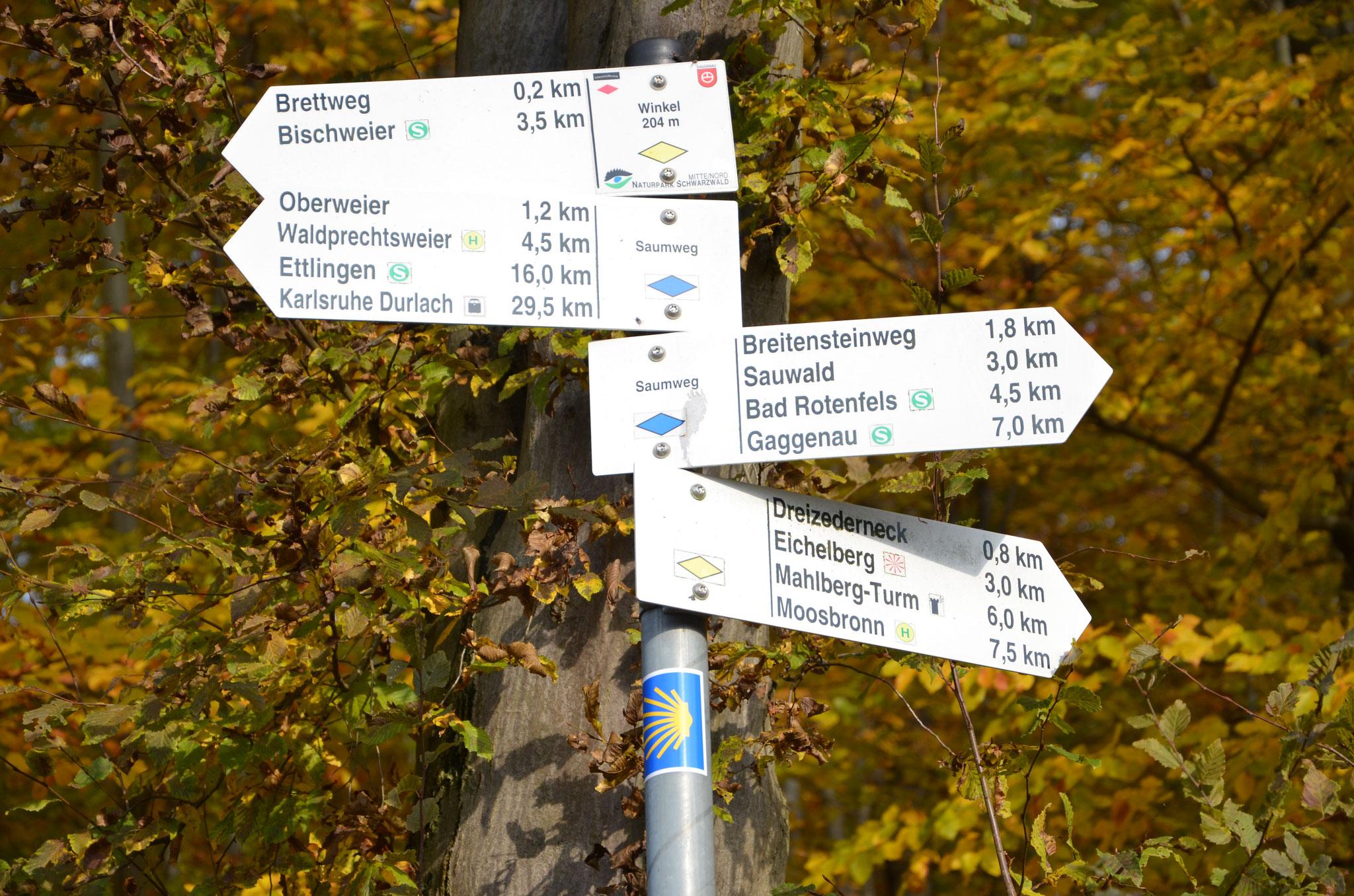 Der Jakobsweg - Einer unter vielen ...