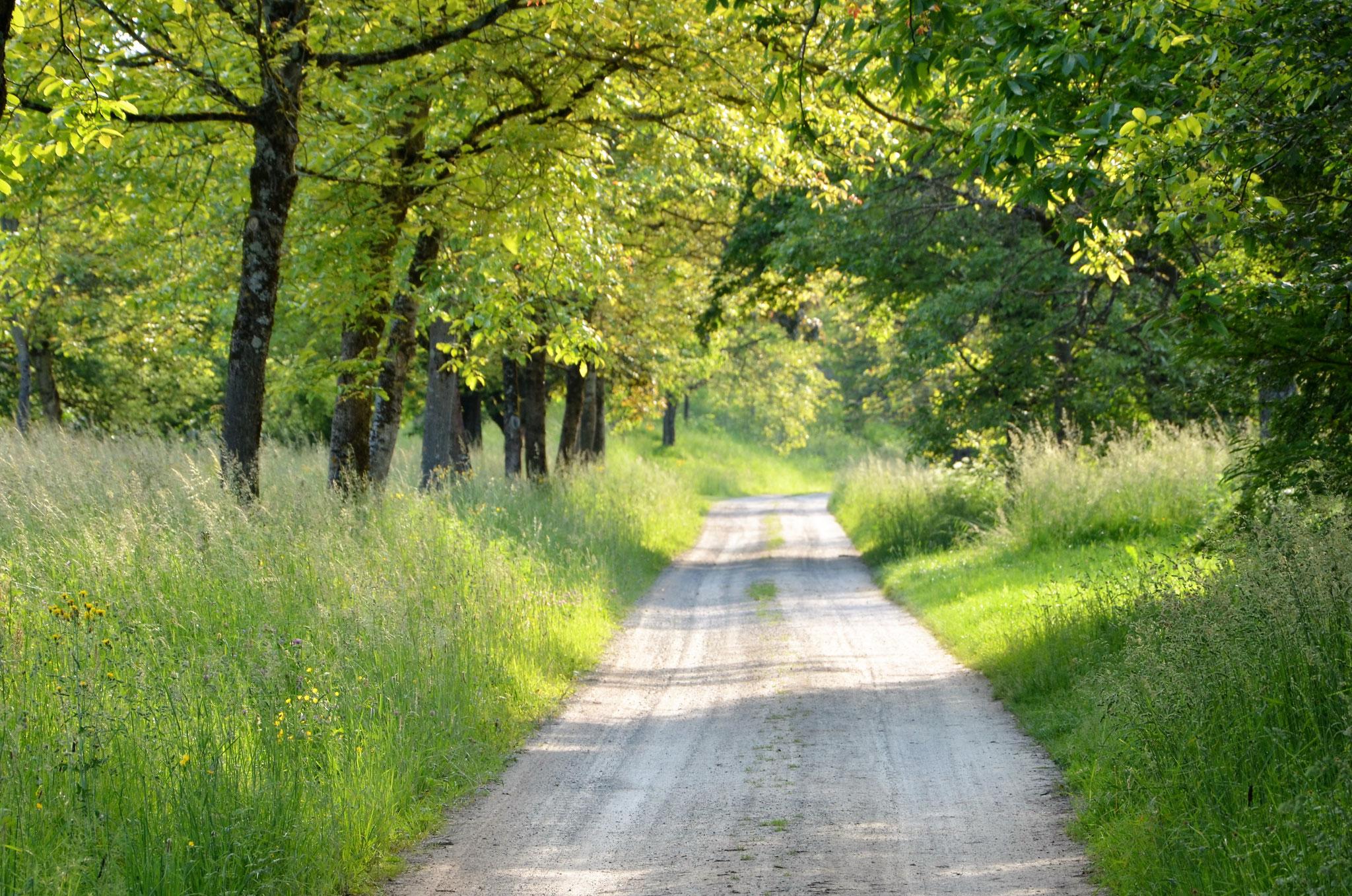 Spaziergang in den Streuobstwiesen