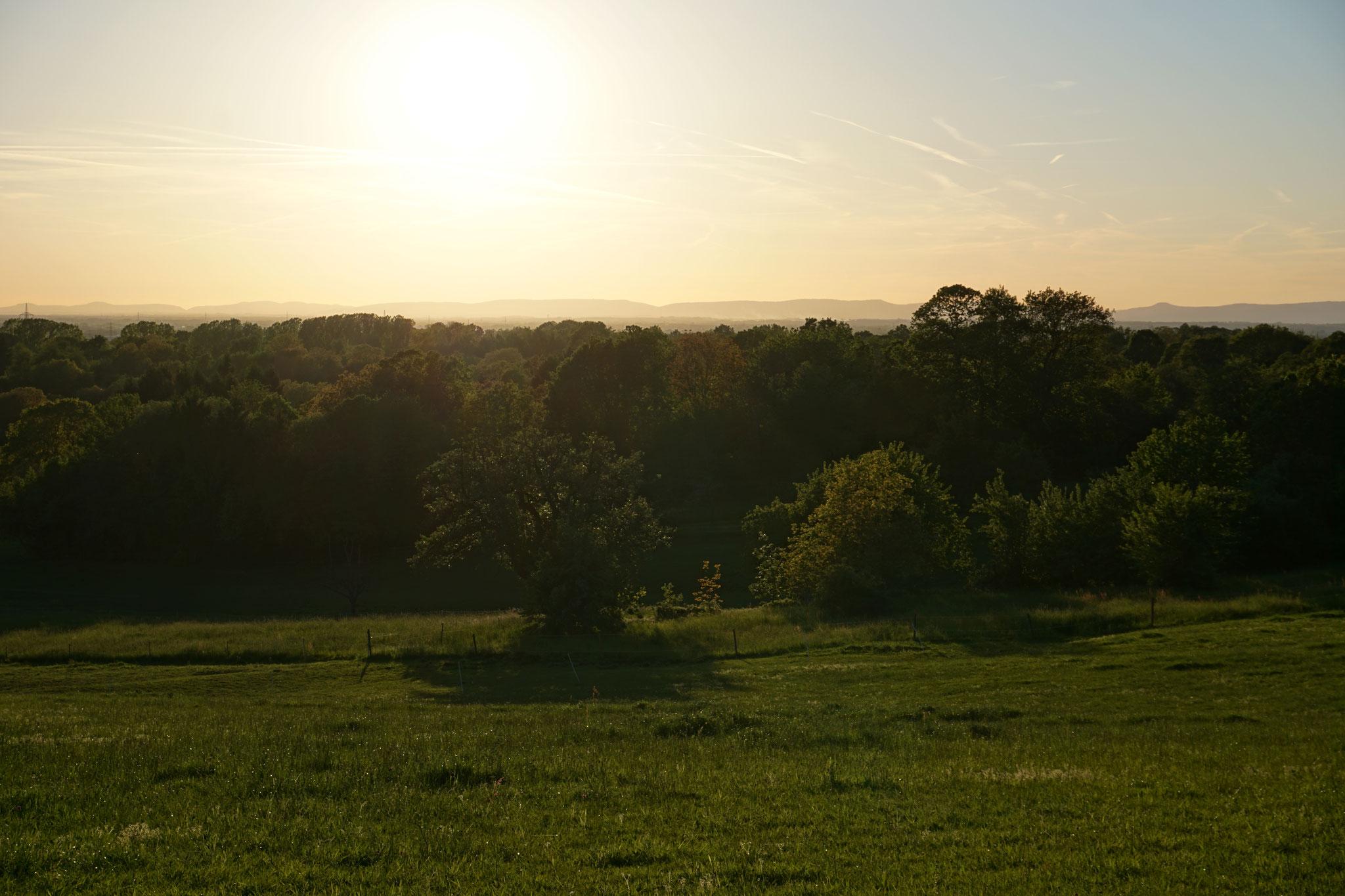 Blick von Winkel in Richtung Pfälzerwald
