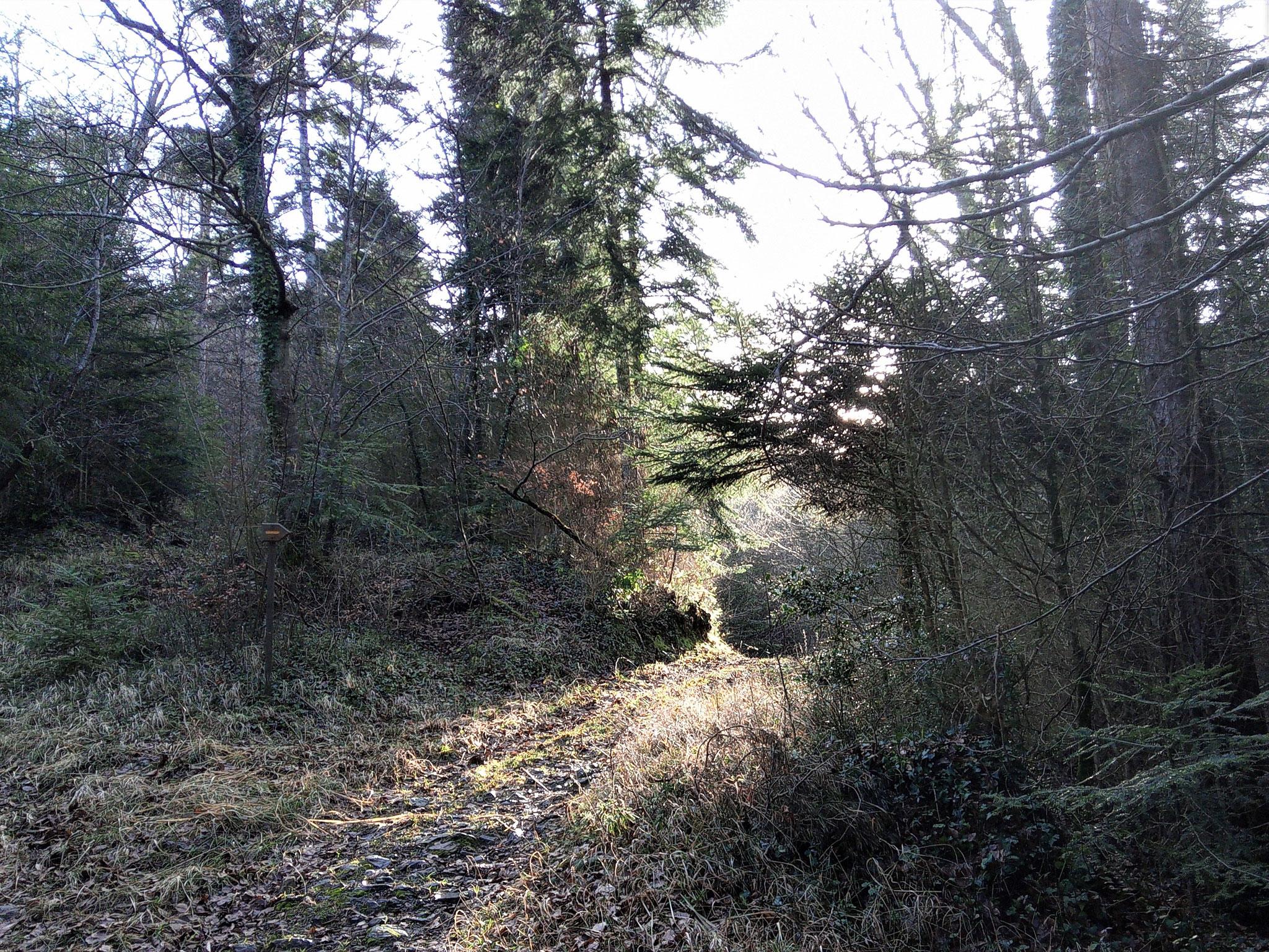 Un chemin en forêt, le long des ruisseaux...