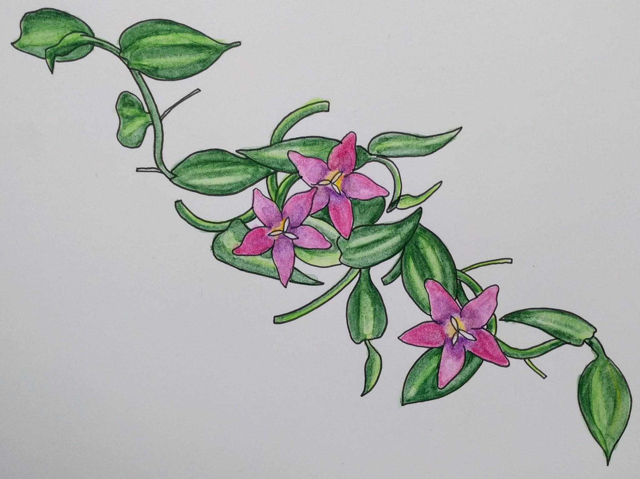 Blütenranke (Zeichenpapier, 21x29cm)