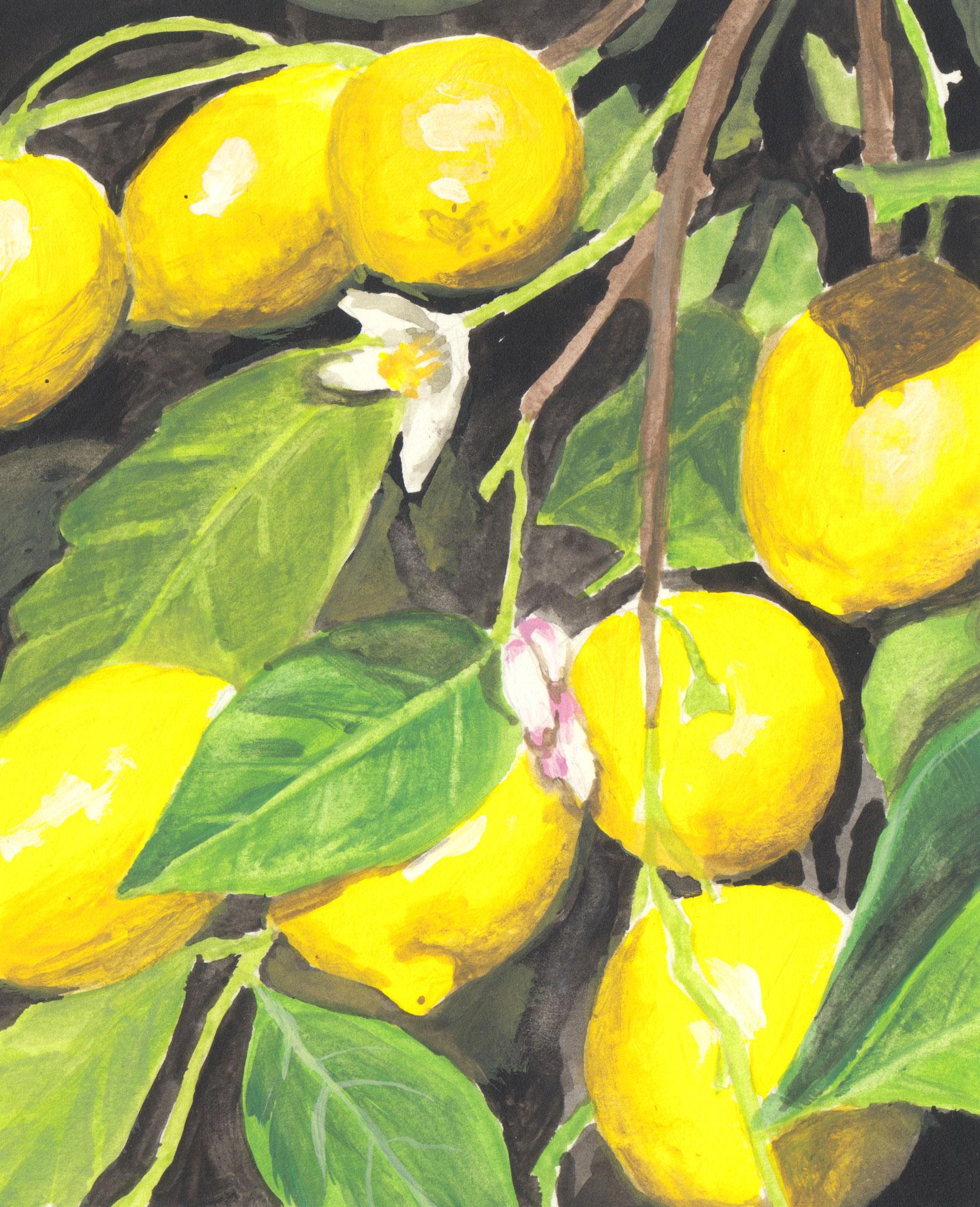Zitronen (Skizzenpapier (8x10cm)