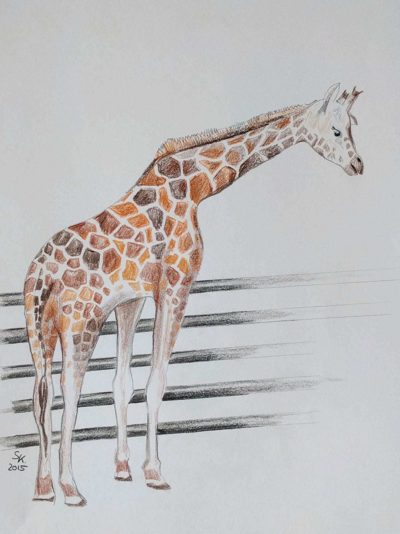 Giraffe am Zaun (Zeichenpapier, 30x40cm)