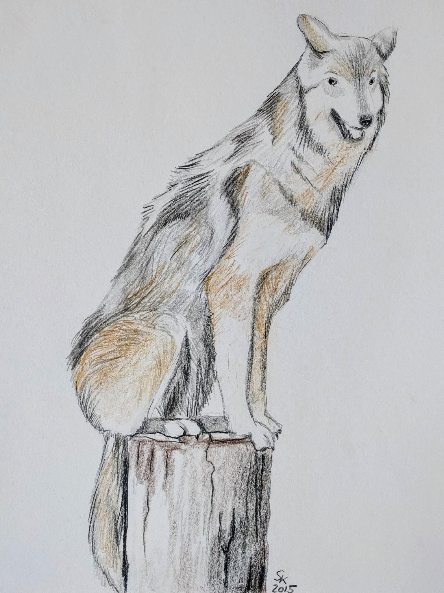 Wolf (Zeichenpapier, 30x40cm)