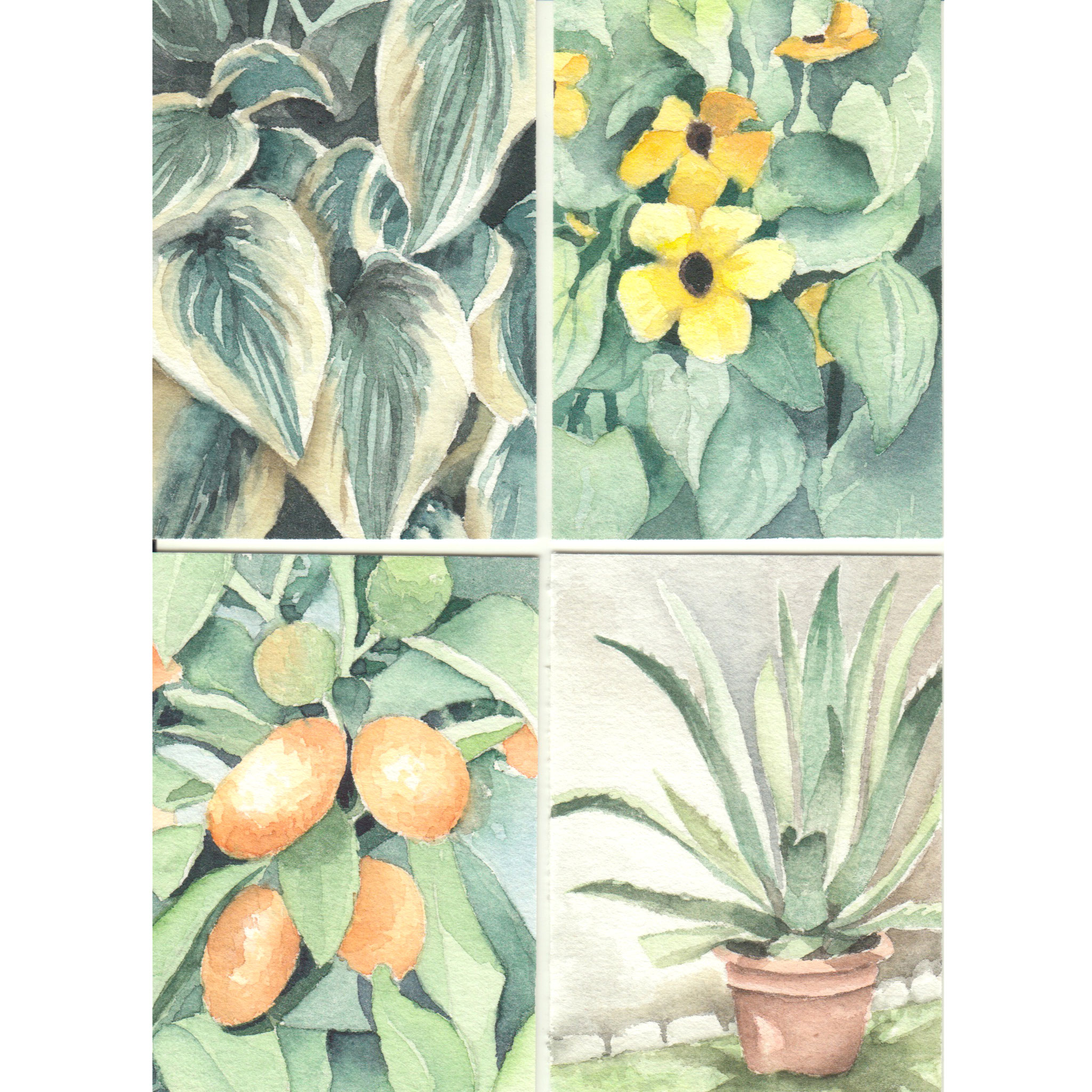 ATC: Pflanzen auf dem Balkon (Skizzenpapier 6,4x8,9cm)
