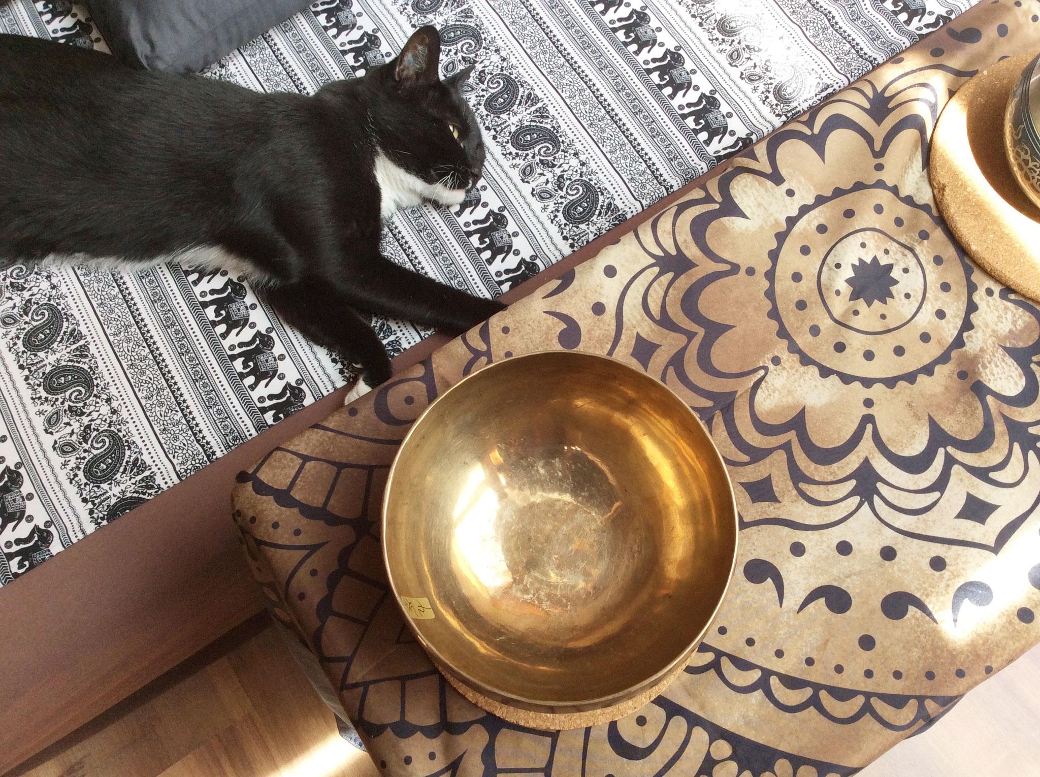 Entspannung auch für meine Katze :-)