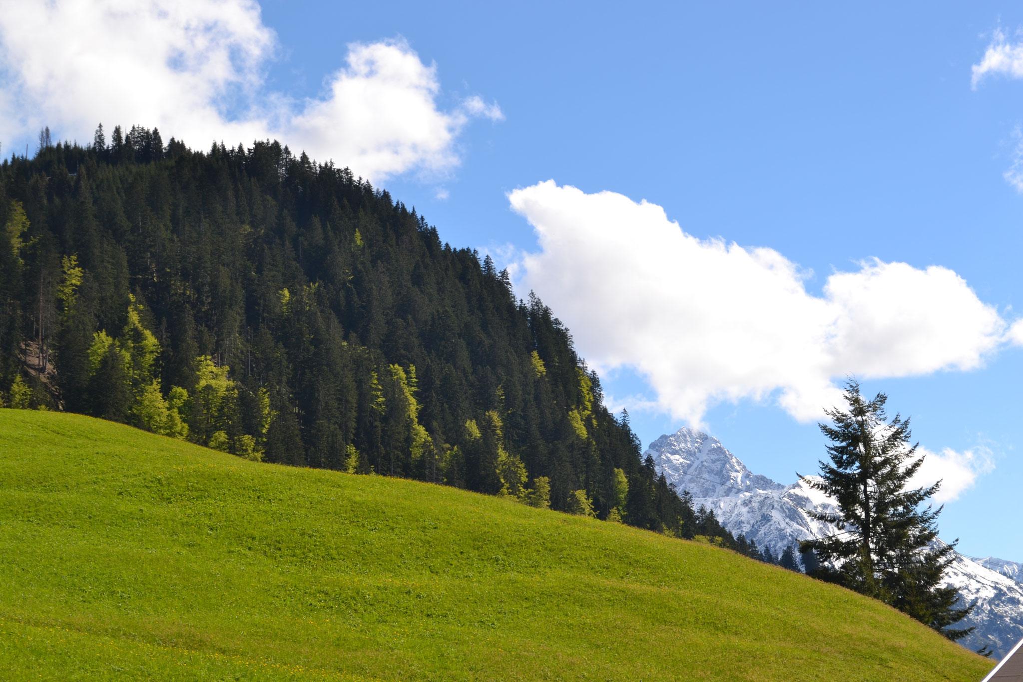 Widderstein weiß, Feld grün