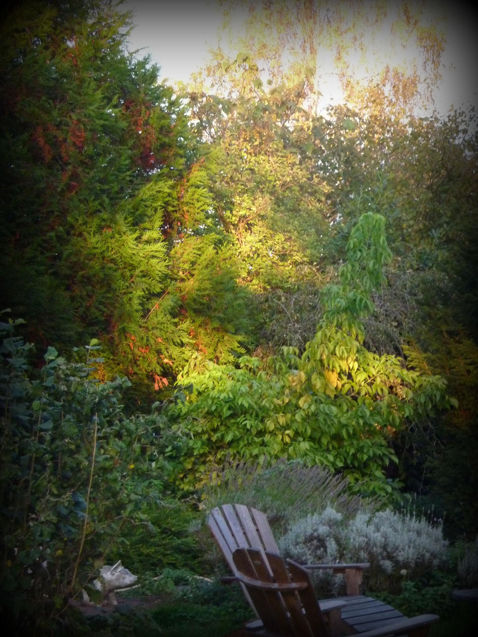 Jardin Haras le Vieux Clos