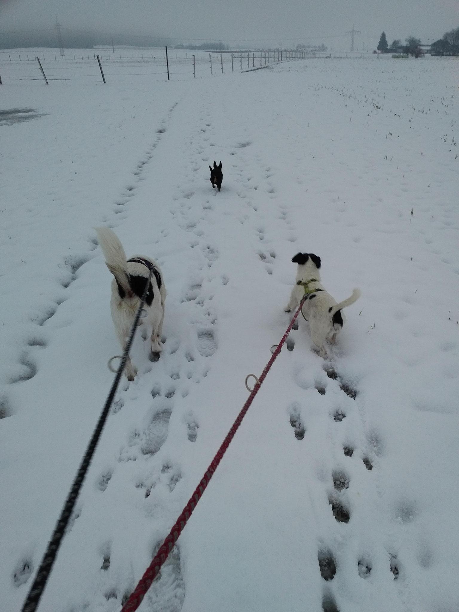 paar Spuren im Schnee...Balthasar und Chiara auf dem Heimweg
