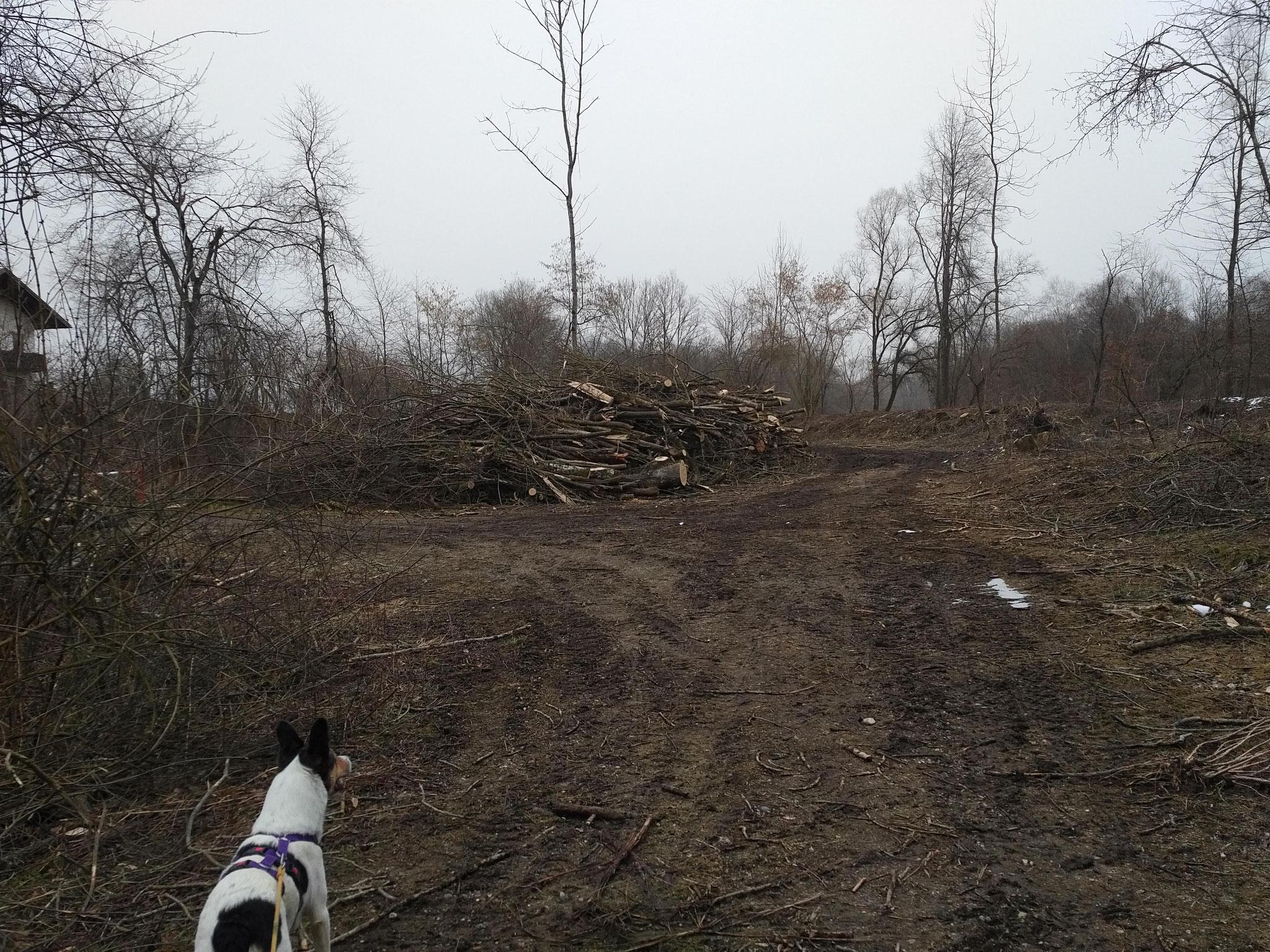 Balthasar fragt sich, wo denn der Wald abgeblieben ist...