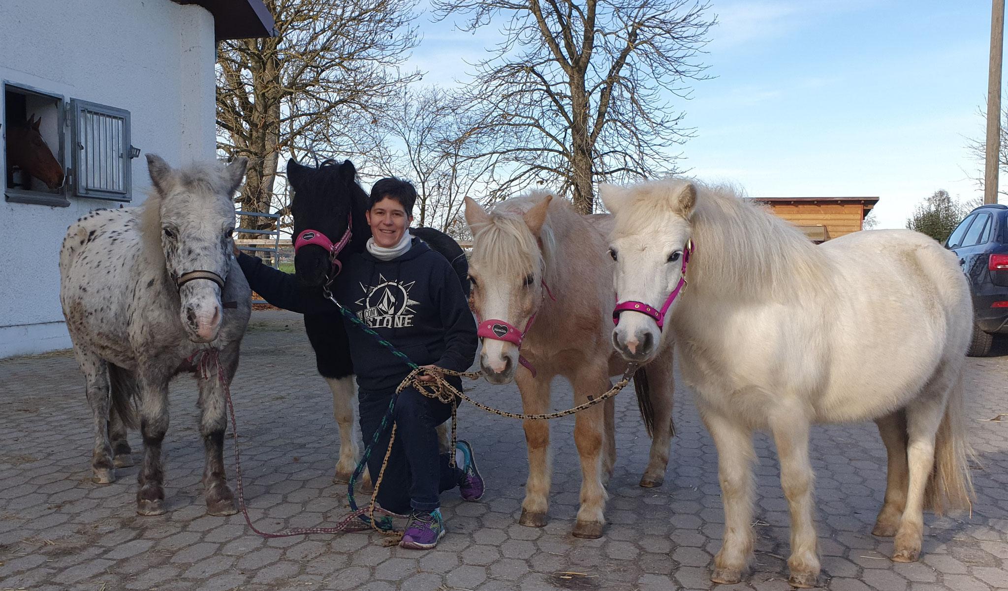Die Quadriga. Die Ponies warten auf Kundschaft :-)