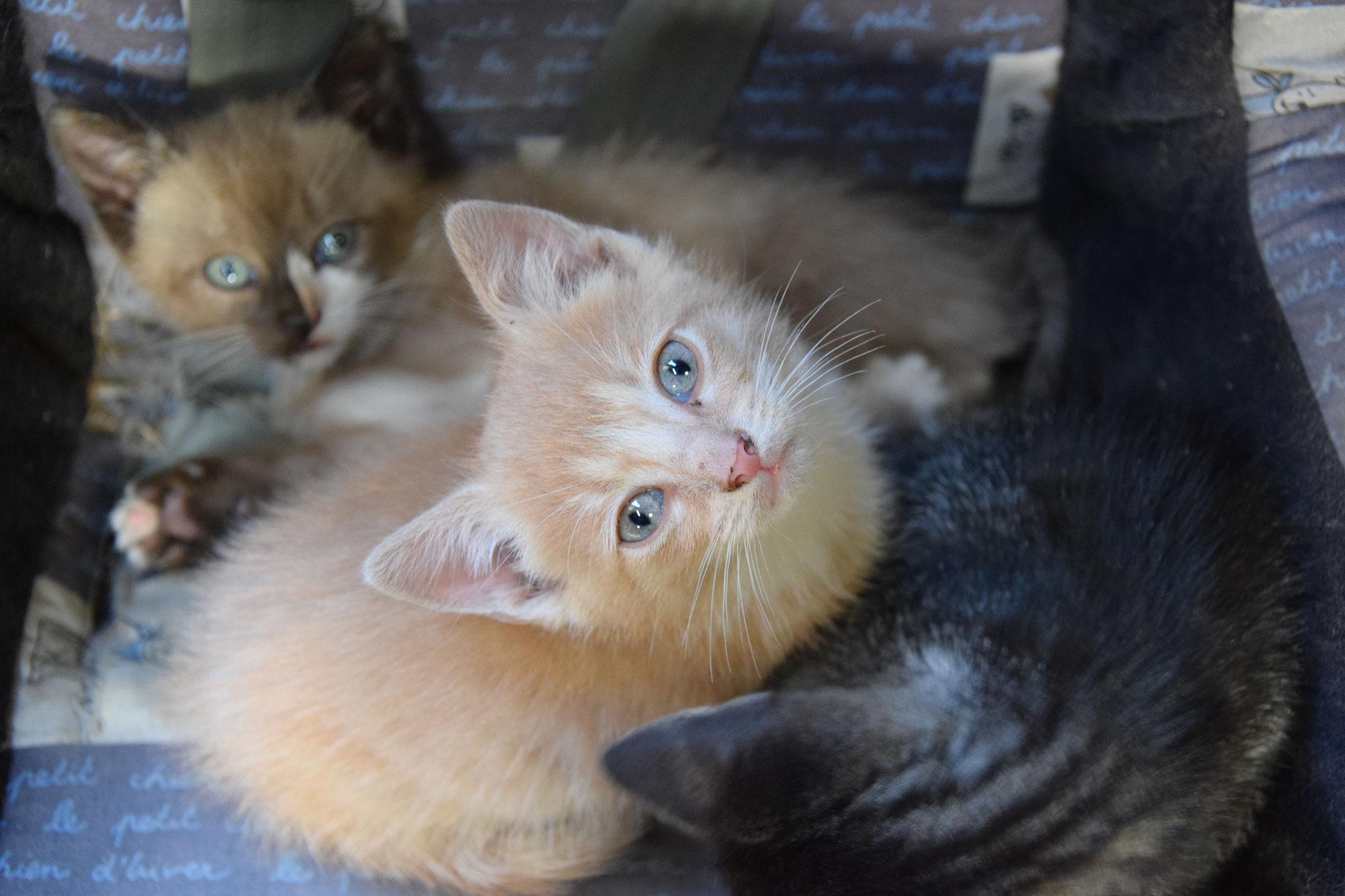 Im Pferdestall wohnen auch die Katzen, oft mit kleinem Nachwuchs.