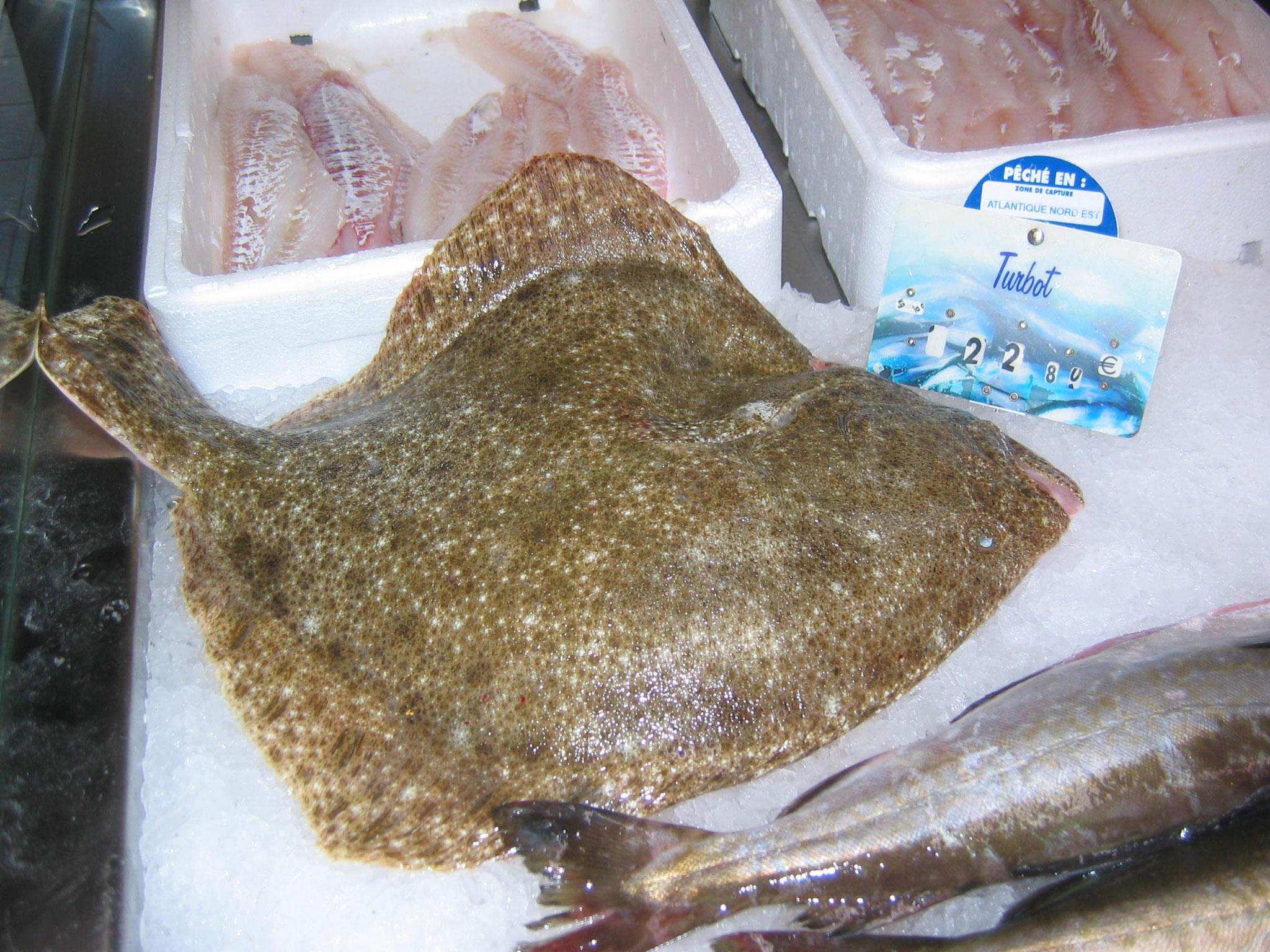 Der Steinbutt ist mit das Beste, was man auf dem Fischmarkt findet