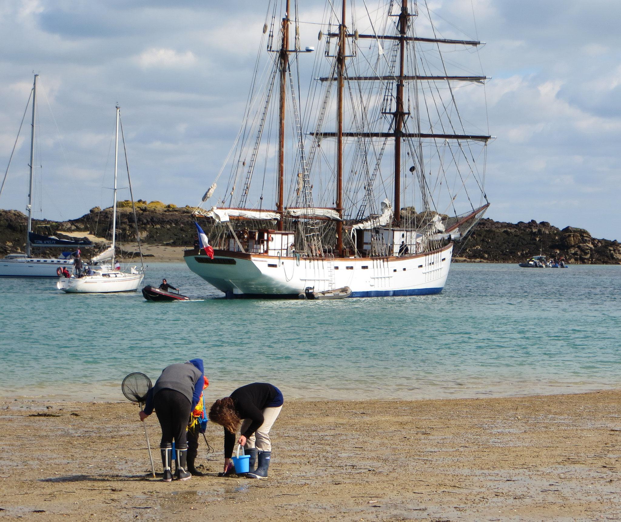 Im Chausey-Archipel in den Englischen Kanalinseln verwandelt sich der Meeresboden täglich vorübergehend in eine Muschel-Sammelbank