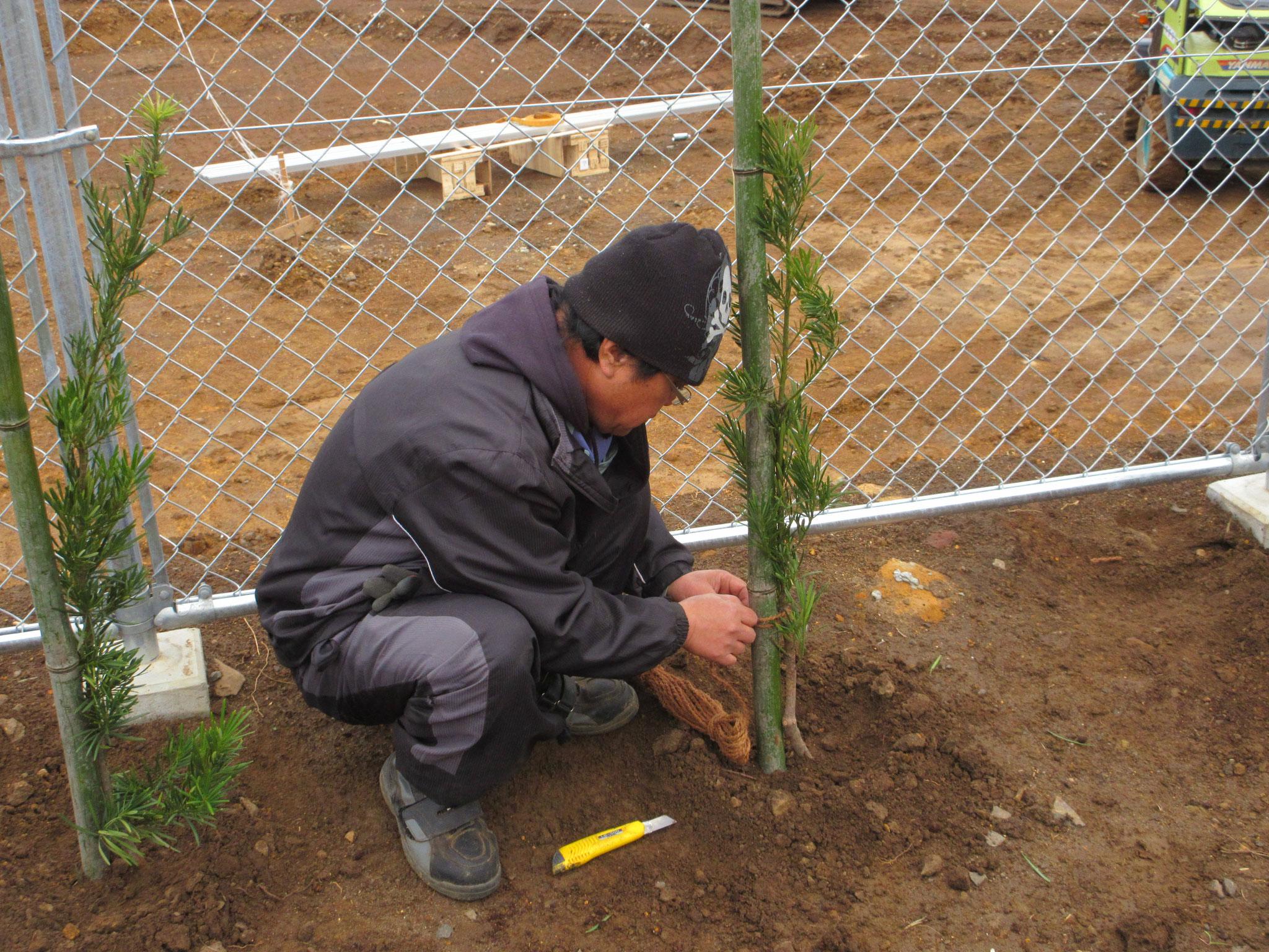 景観対策植樹