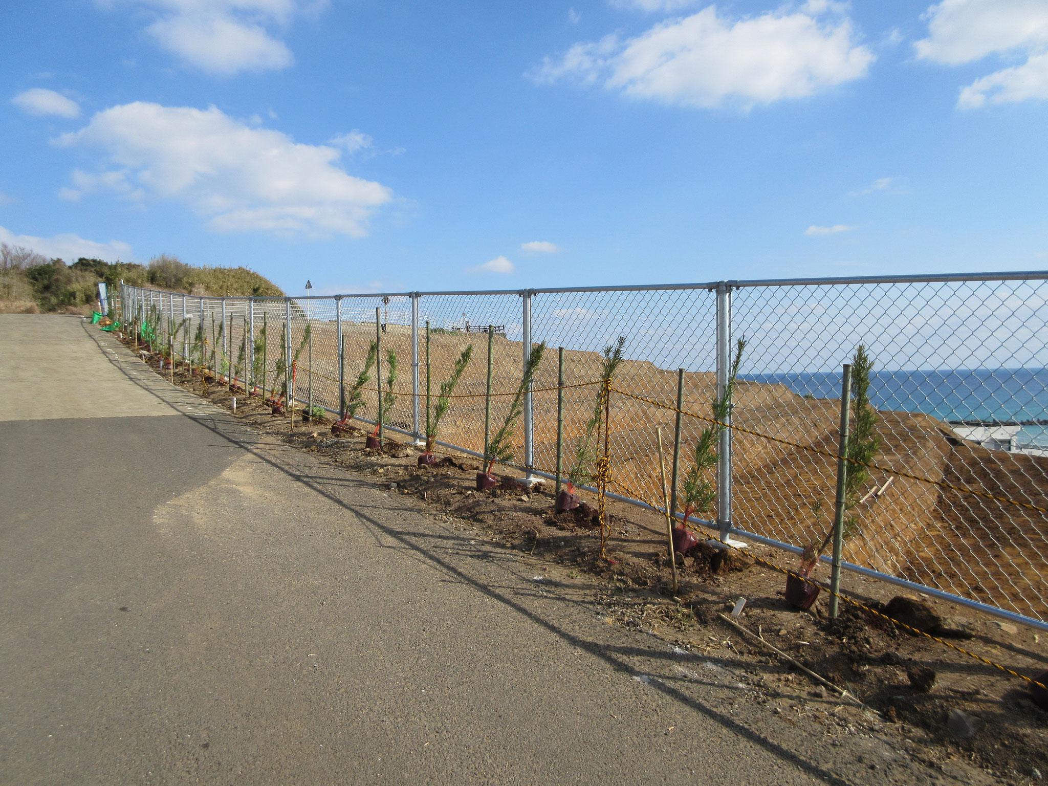 景観対策植樹付きフェンス完成