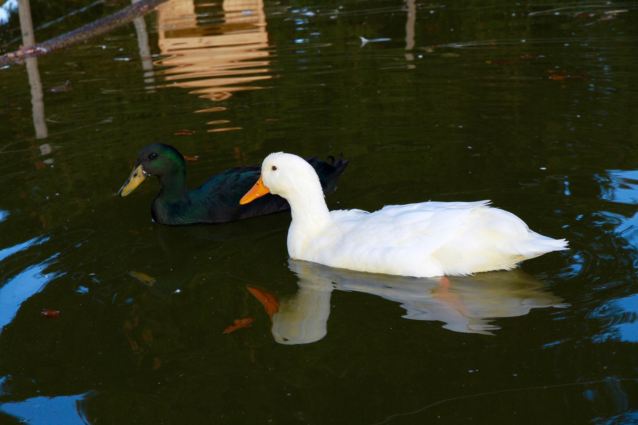 """Jolina und Lulu haben das Geschehen im Chinderweidli immer im Auge und geben ihren """"Quack"""" dazu."""