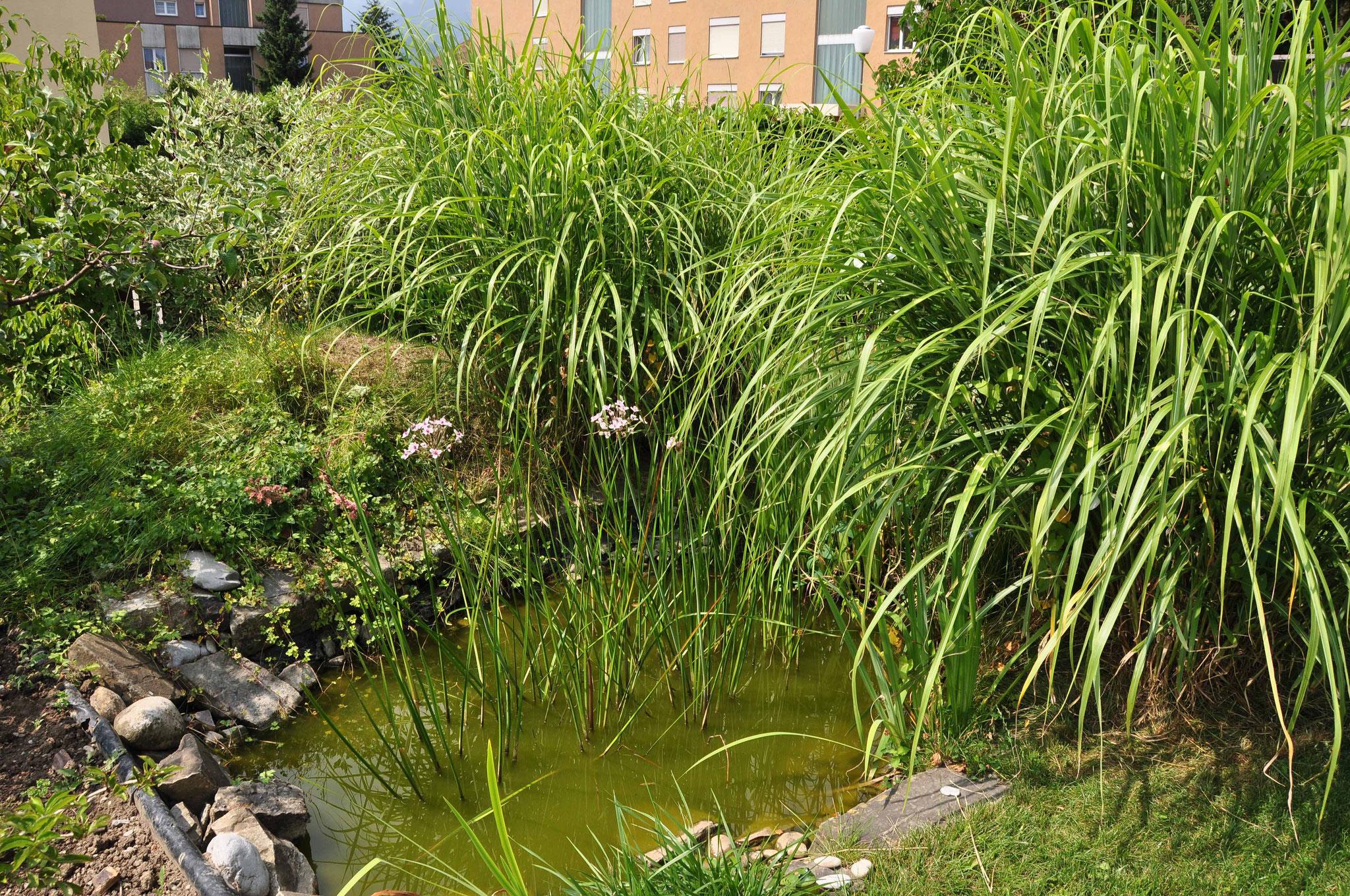 Unser Teich im Garten