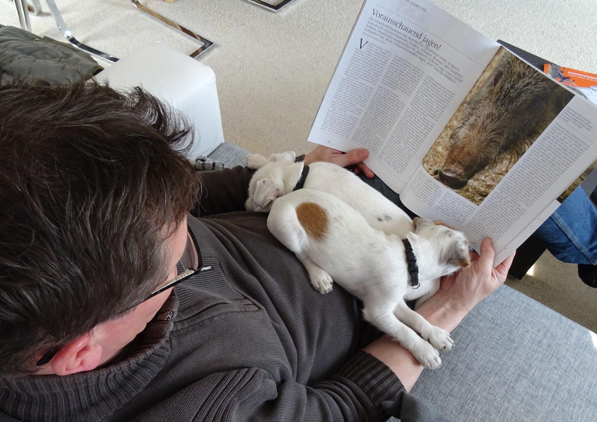 Lektüre für Herrchen und Hunde - Wildschweinjagd