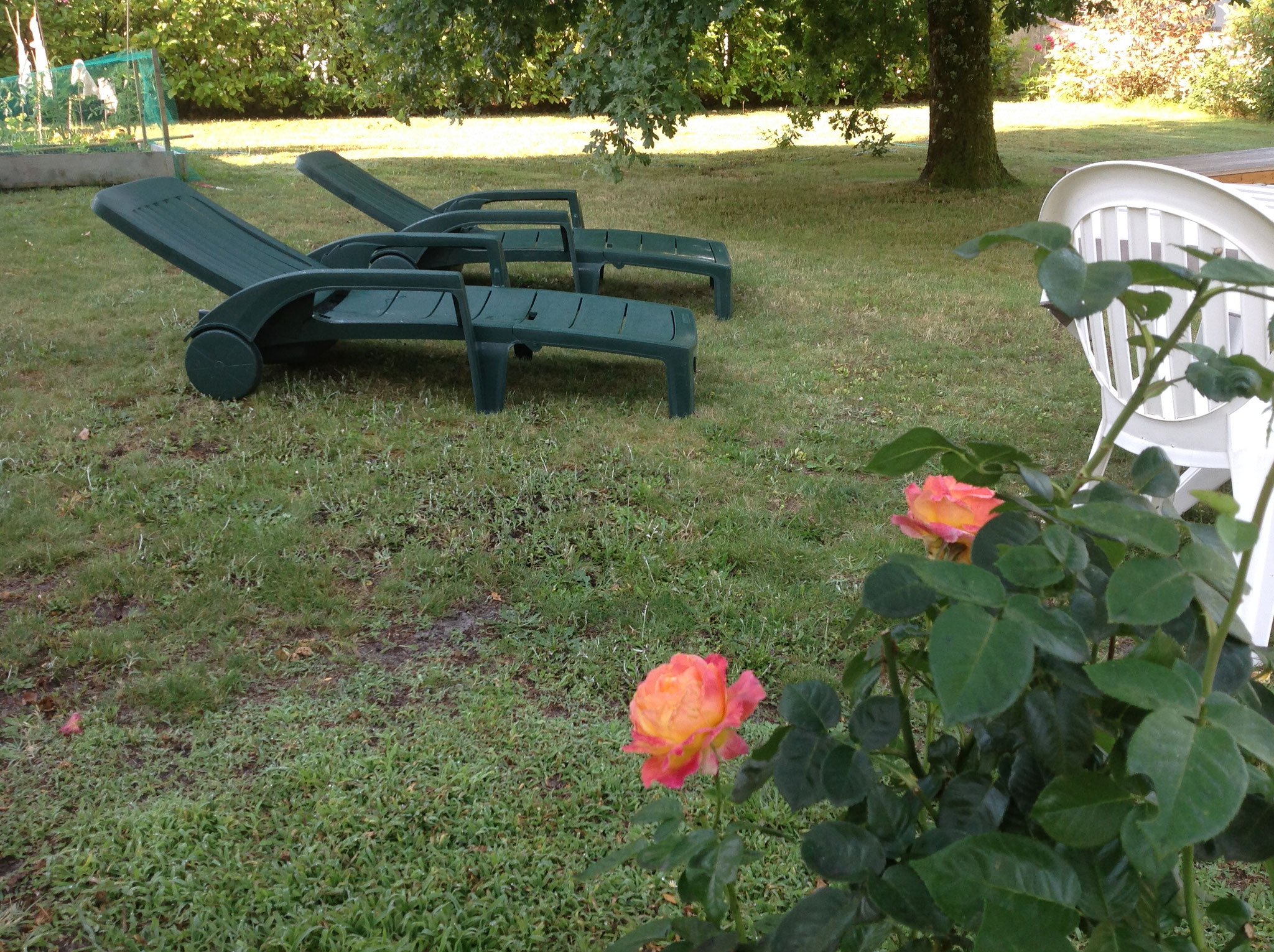 Jardin LES ARUMS DE SANGUINET