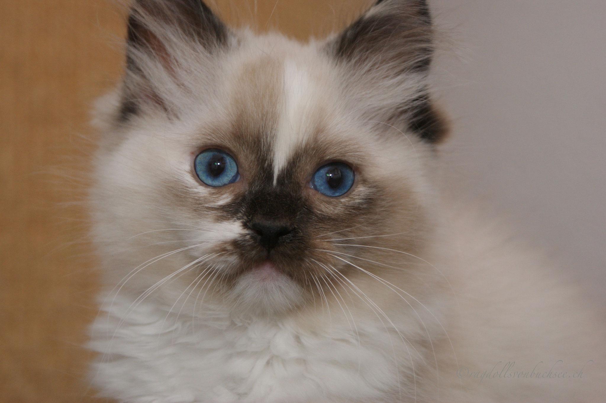 Baby blau, Chérie