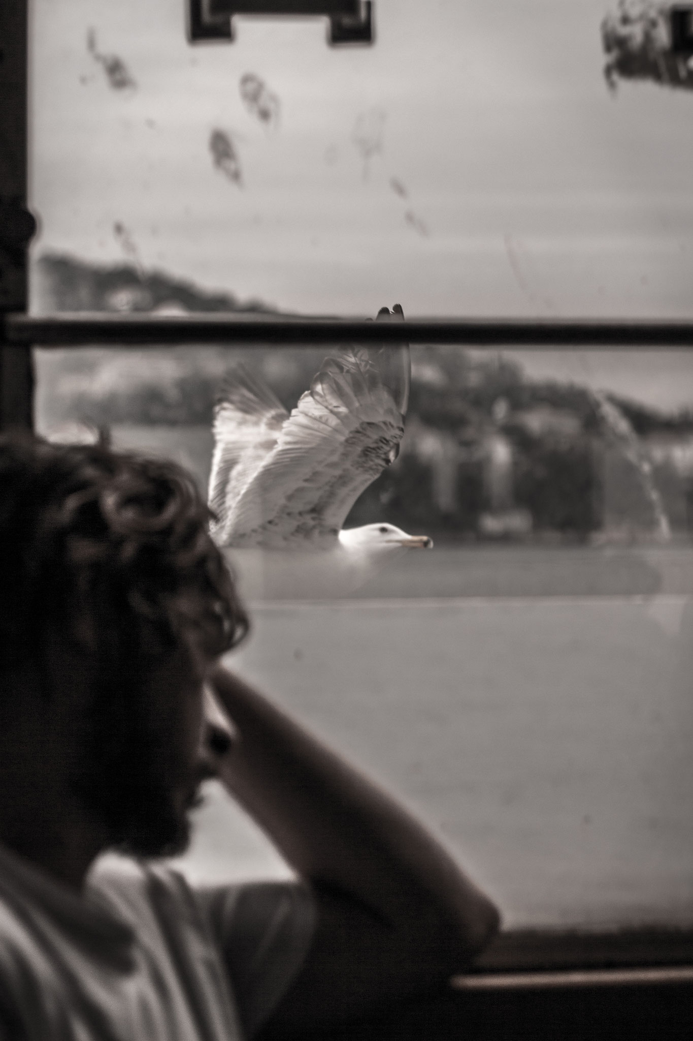 Seagulls through a ferry window, Istanbul. June 2016.