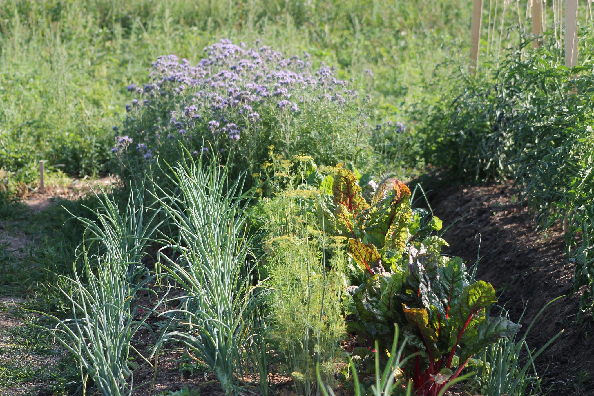 Auch Blumen und Kräuter sind mit dabei