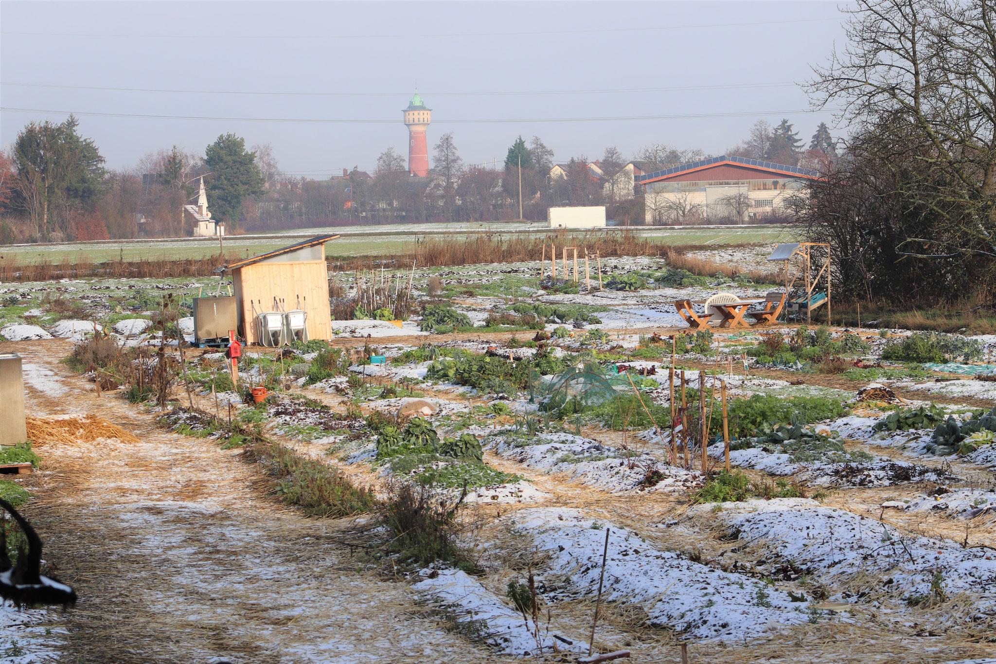 Der Gemeinschaftsacker ist auch im Winter ein schöner Ort